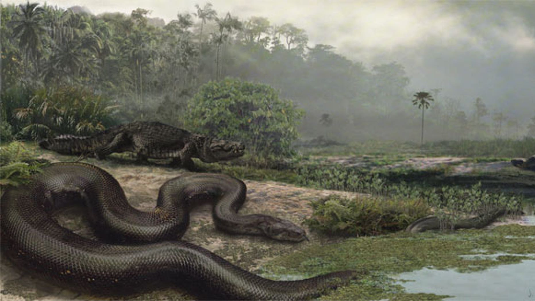 The extinct giant snake, called Titanoboa (shown in an artist's reconstruction), would have sent even Hollywood's anacondas slithering away.