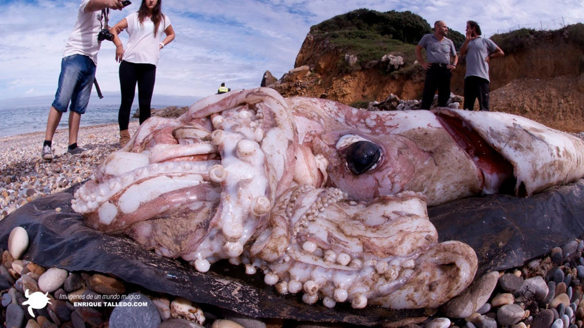 On Oct. 1, 2013, a 30-foot-long giant squid washed ashore in the Spanish community of Cantabria.