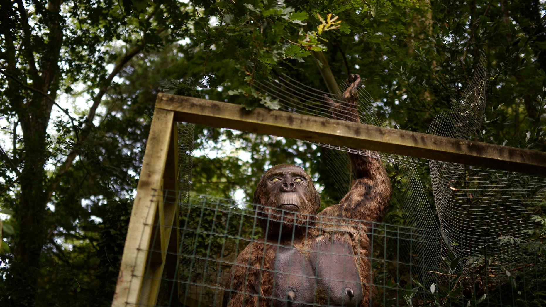 A life-size model of a Gigantopithecus tearing its cage is seen at the Karpin Abentura park in the Karrantza valley, outside Bilbao July 26, 2014. (REUTERS/Vincent West)