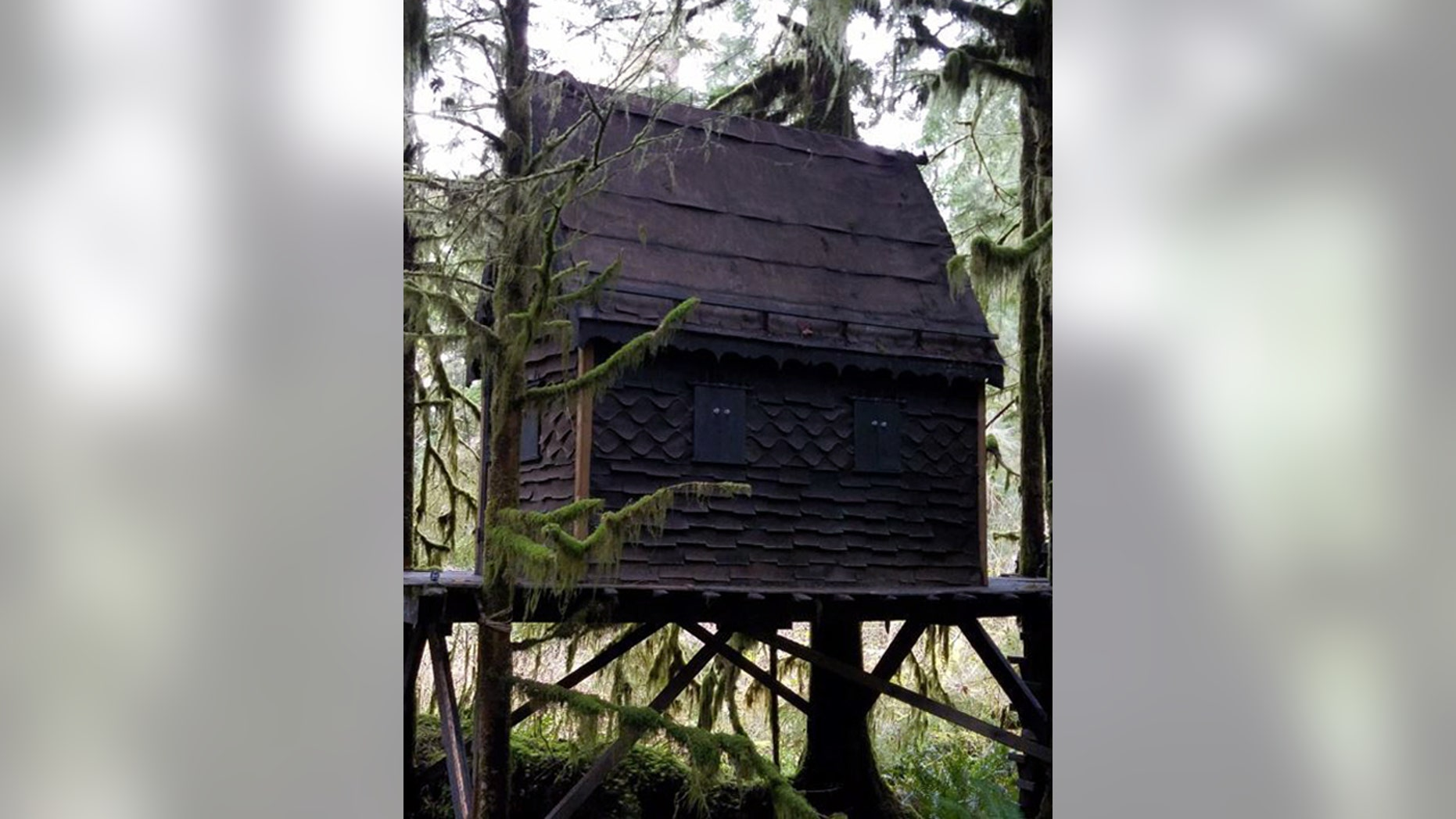 The 'treehouse' in Washington state's Snoqualmie National Forest.