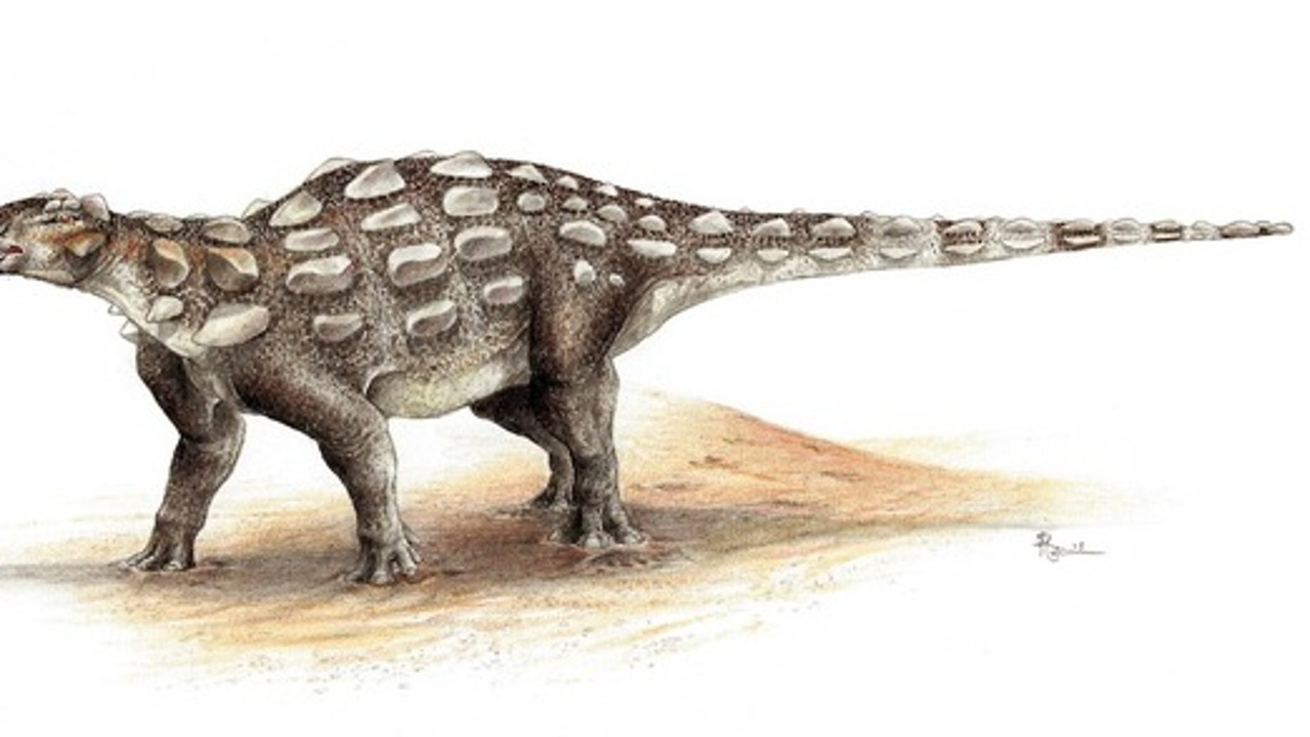 An illustration of <em>Gobisaurus</em>, an ankylosaur with a stiff tail but no knob of bone at the end.
