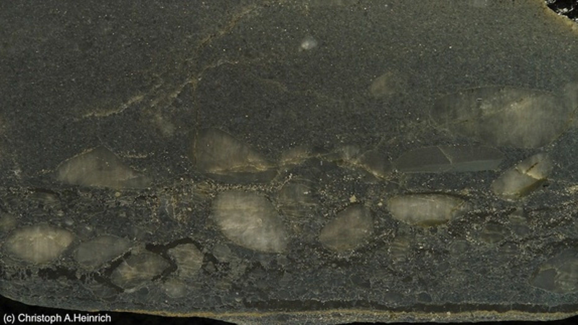 A layer from a reef found in the Witwatersrand deposit. The black carbon layer contains bonanza-grade gold as tiny inclusions, as well as pyrite and quartz pebbles.  The base is formed from an ancient microbial mat. A new theory proposes that a