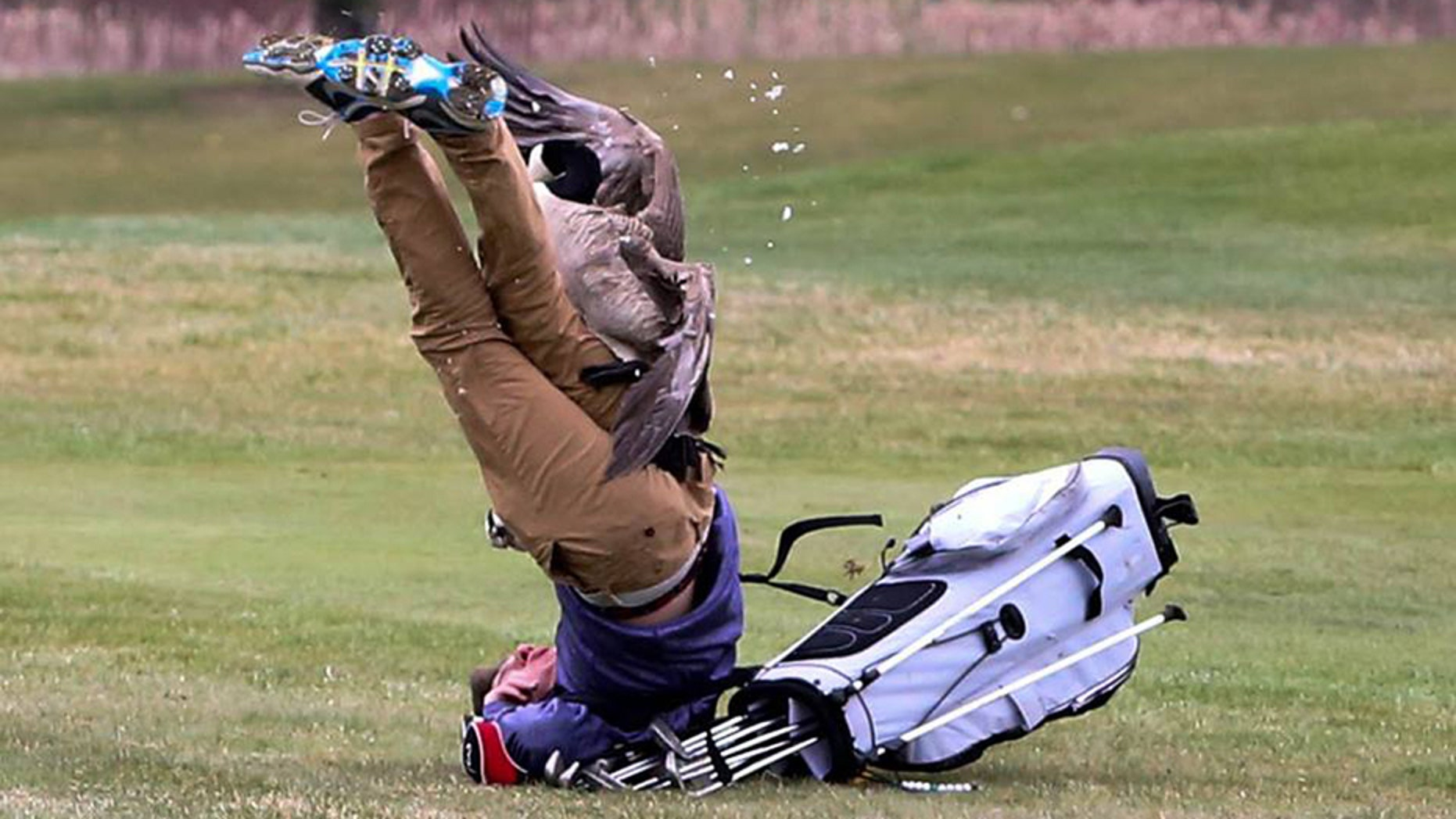 A goose upended high school golfer Isaac Couling at a tournament in Michigan over the weekend.