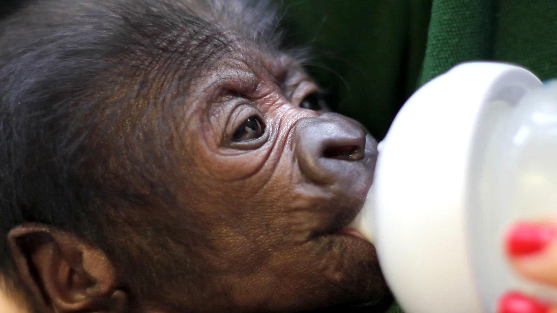 (Bristol Zoo Gardens)