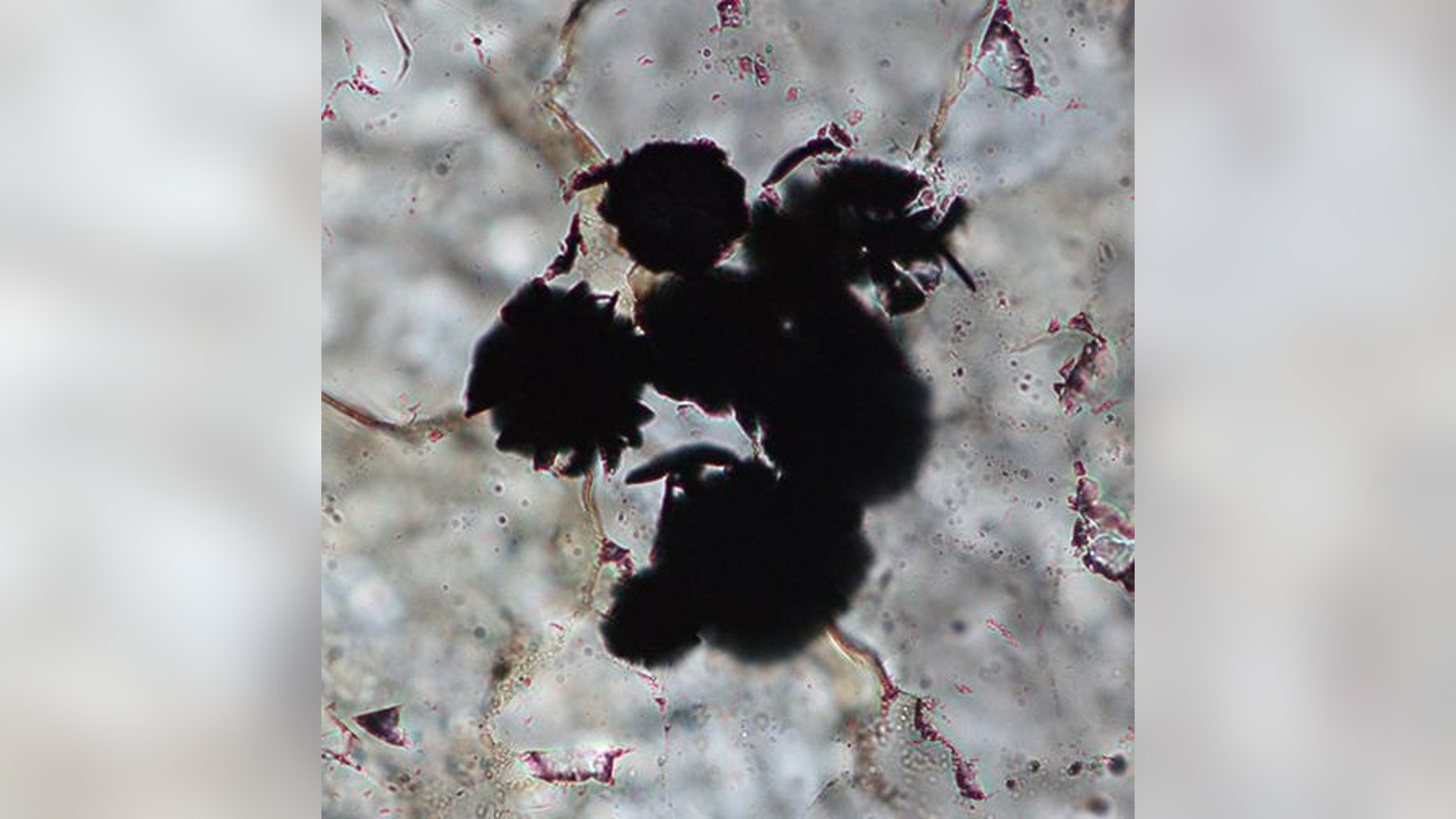 Graphite in 3.95-billion-year-old rocks from Labrador, Canada, may be the oldest evidence of life on Earth.