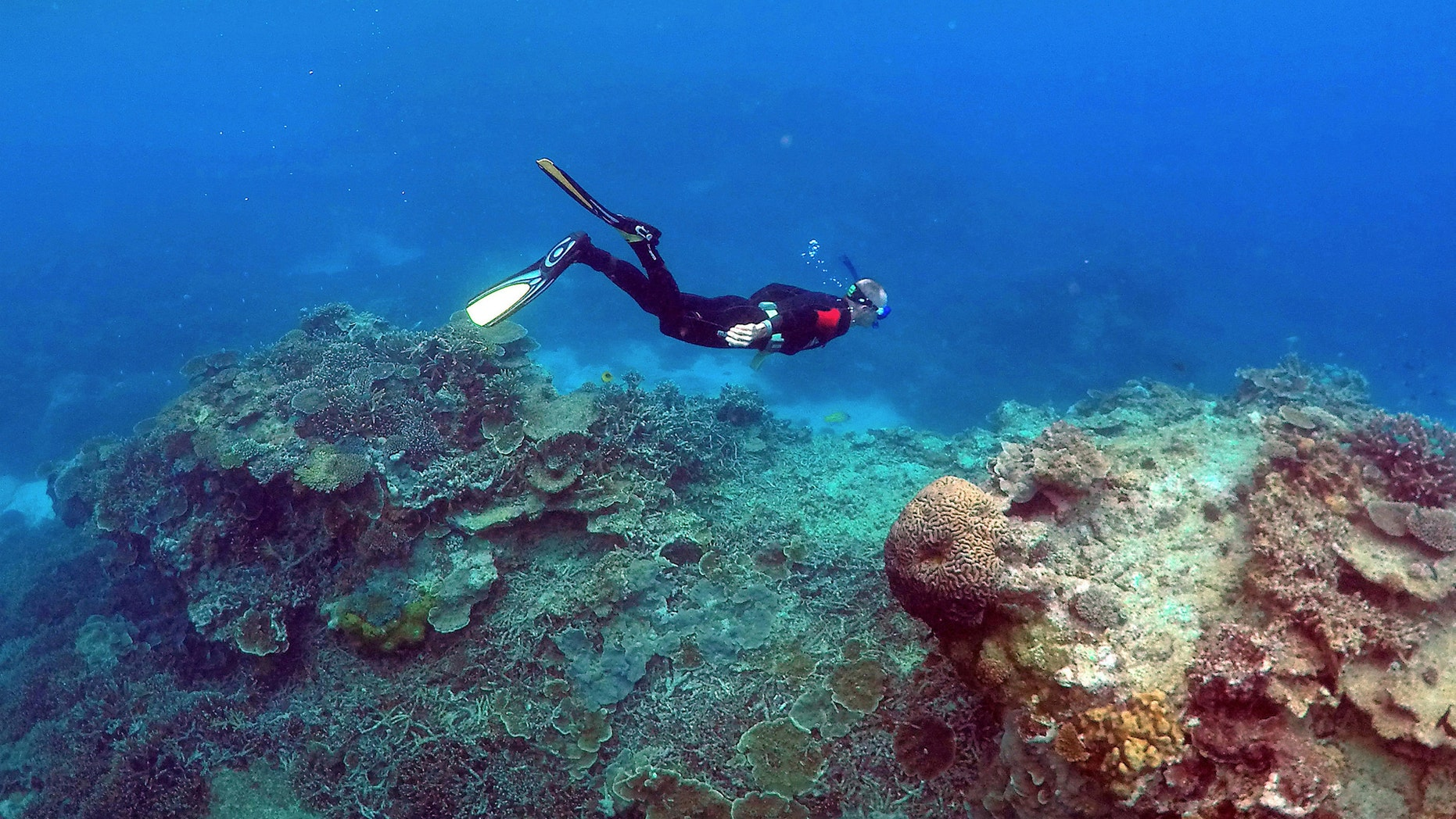 "File photo: A man snorkels in an area called the ""Coral Gardens"" near Lady Elliot Island, on the Great Barrier Reef, northeast of Bundaberg town in Queensland, Australia, June 11, 2015. (REUTERS/David Gray)"