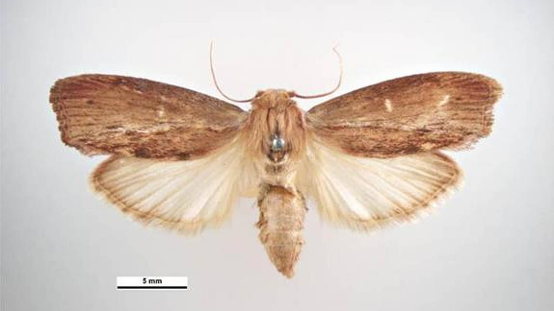 The greater wax moth can hear the highest-known sound frequency.
