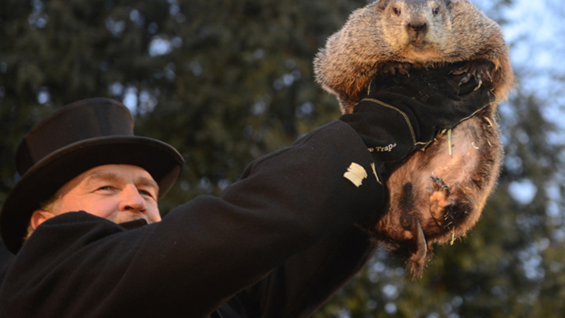 Handler John Griffiths introduces Punxsutawney Phil to the crowd at Gobbler's Knob.
