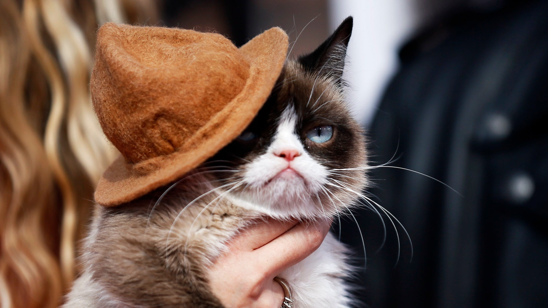Grumpy Cat arrives at the 2014 MTV Movie Awards in Los Angeles, California, on April 13, 2014.