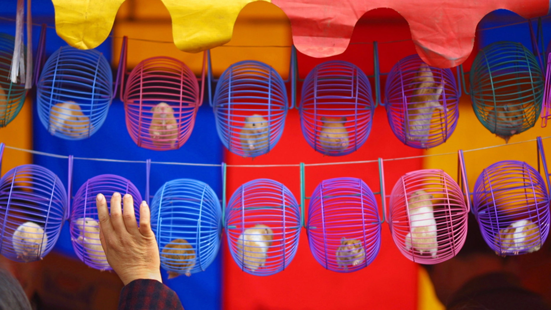 File photo - A Chinese woman buys a hamster at a Chinese New Year fair in Beijing February 13, 2002. (REUTERS/Andrew Wong)