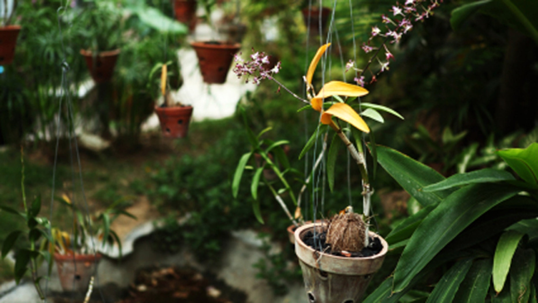 For Those With Small Yards, Or No Yards At All, A Verdant, Thriving Garden  Can Seem Like An Impossibility. But More And More People Are Looking Upward  To ...
