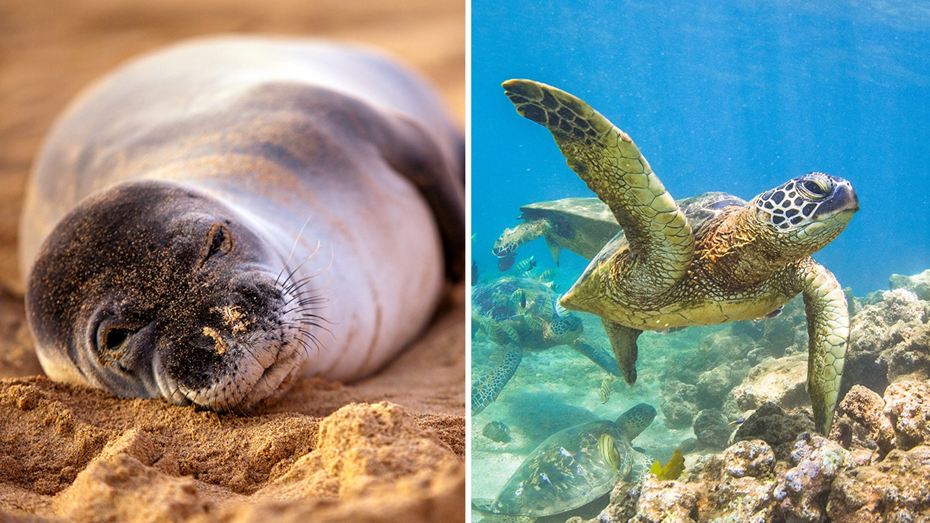A tourist in Hawaii will pay a $1,500 fine for harassing endangered animals.