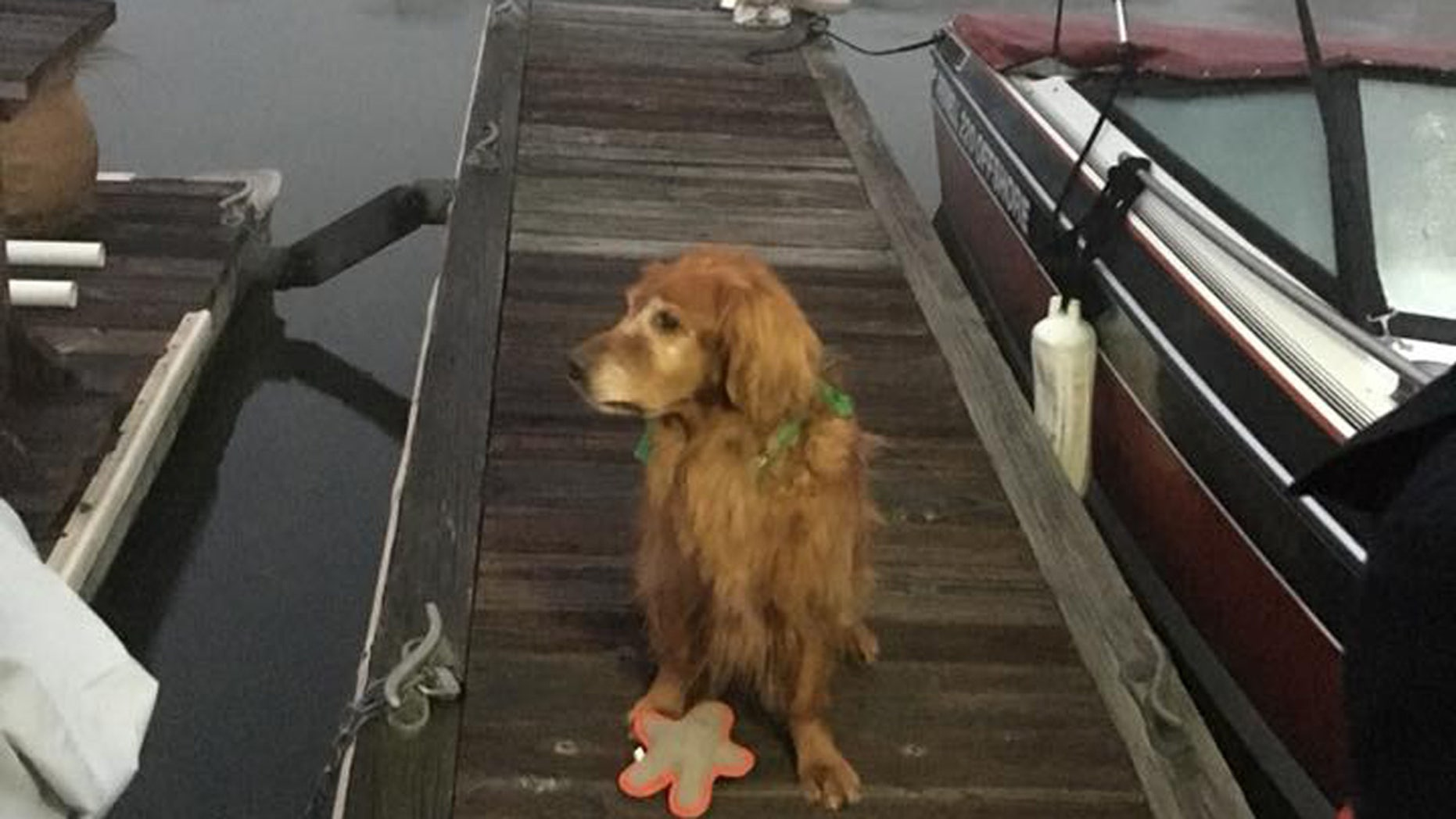 "A Golden Retriever named ""Moe"" is being hailed as a hero after he woke his owner when a man fell into the water at a marina."