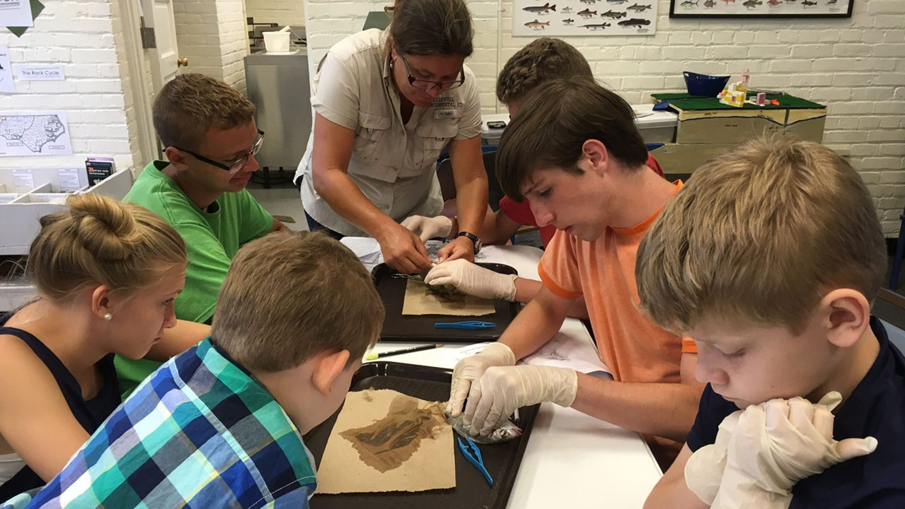 A homeschool biology class/dissection lab that Homeschool Road Trips — a division of Hip Homeschool Moms had during one of their HEART trips (Homeschool Educational Adventure Road Trips) to Fort Caswell, North Carolina.