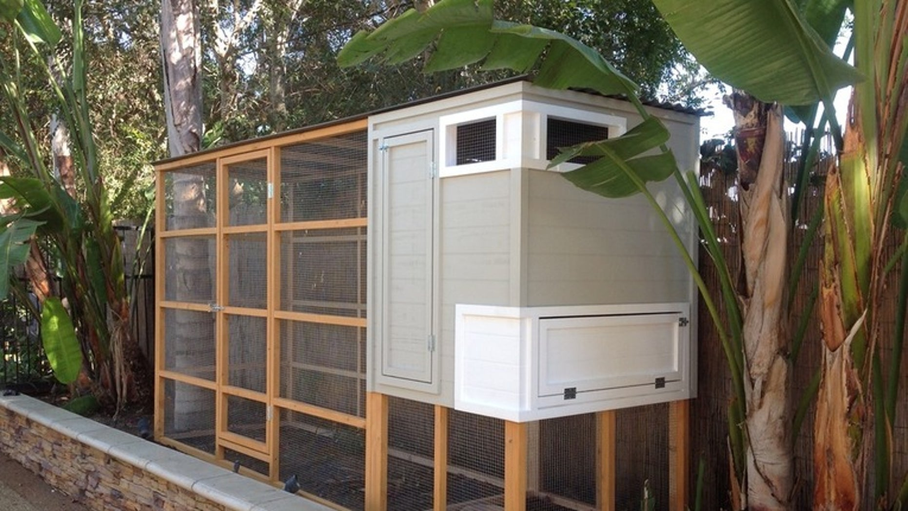 Backyard Chicken Coup is a backyard chicken coop right for you? | fox news