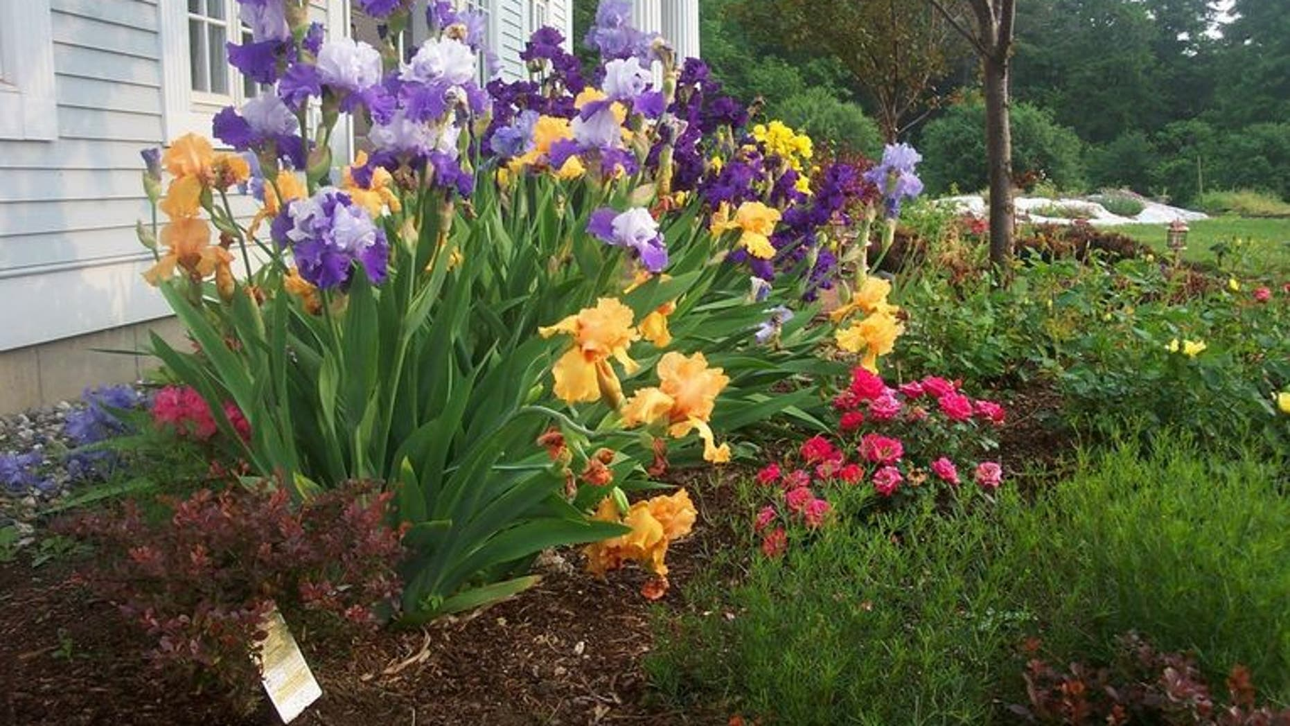 Incorporate Irises In Your Fall Garden For Beautiful Spring Blooms