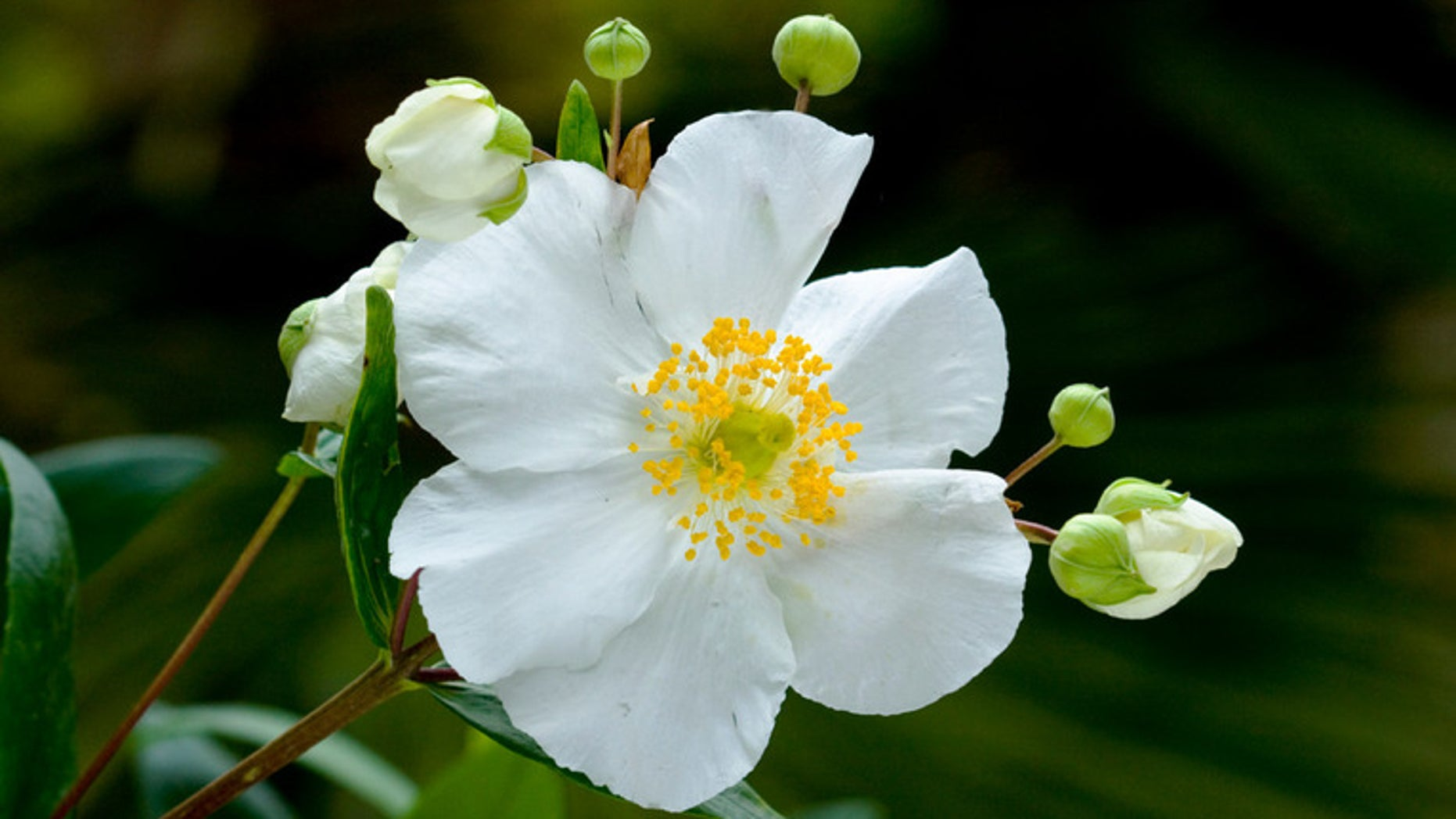 White Flowers Brighten Gardens By Enhancing Everything Around Them, Rather  Than Stealing The Show. Here Are 20 Of Our Favorite White Flowering Great  Design ...
