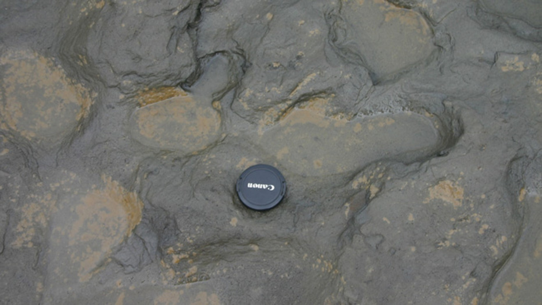 Undated handout photo issued by the British Museum of some of the  human footprints, thought to be more than 800,000 years old, found in silt on the beach at Happisburgh on the Norfolk coast of England, with a camera lens cap laid beside them to indicate scale.