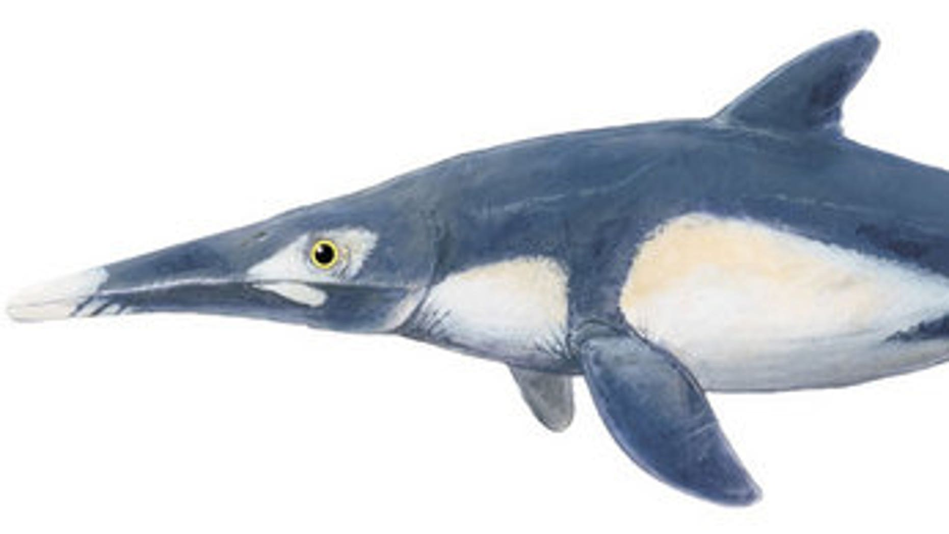 This image shows what one type of ichthyosaur, called Platypterygius, might have looked like.