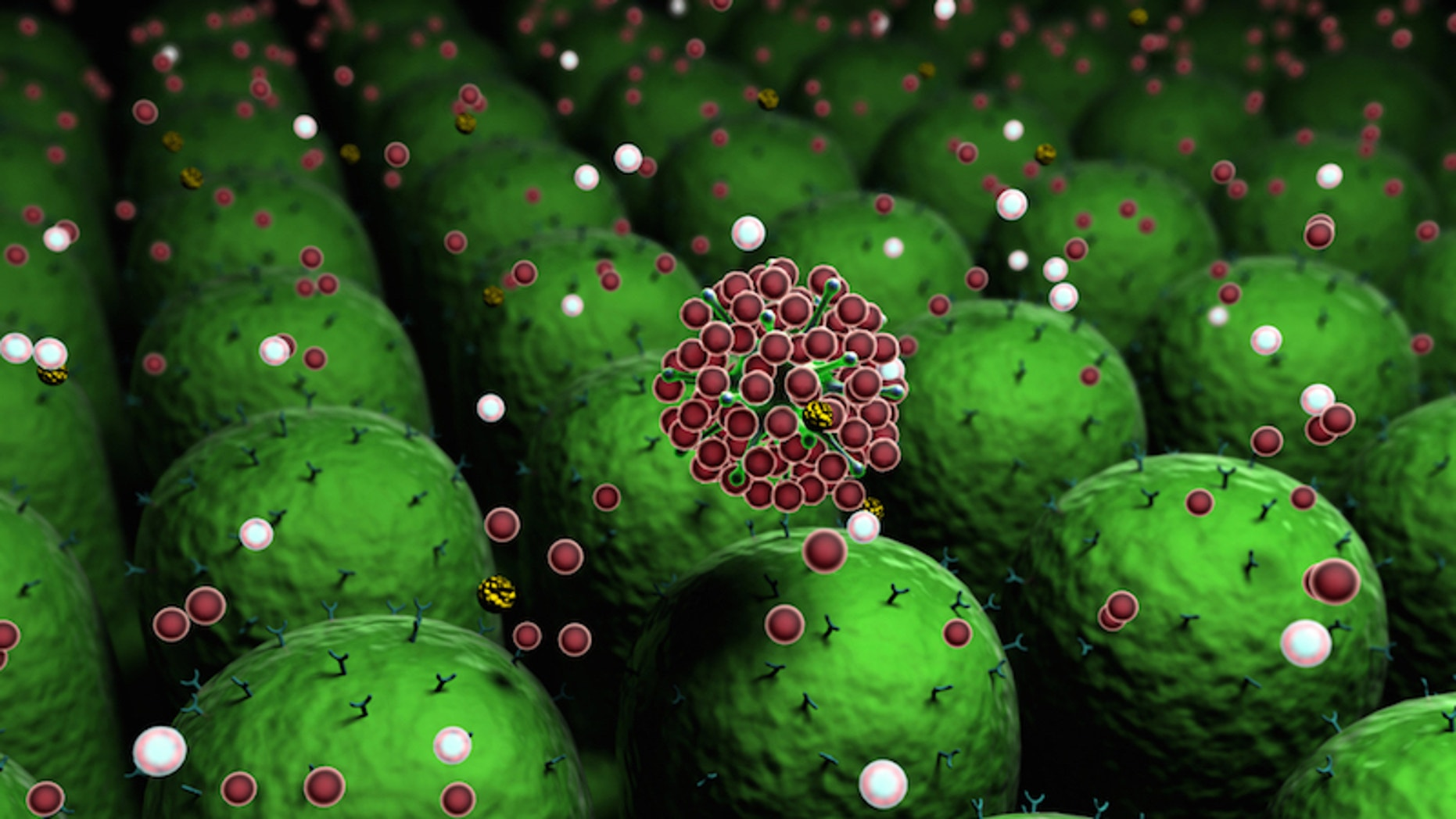 This drawing shows an artist's concept of the molecules of the human immune system at work.