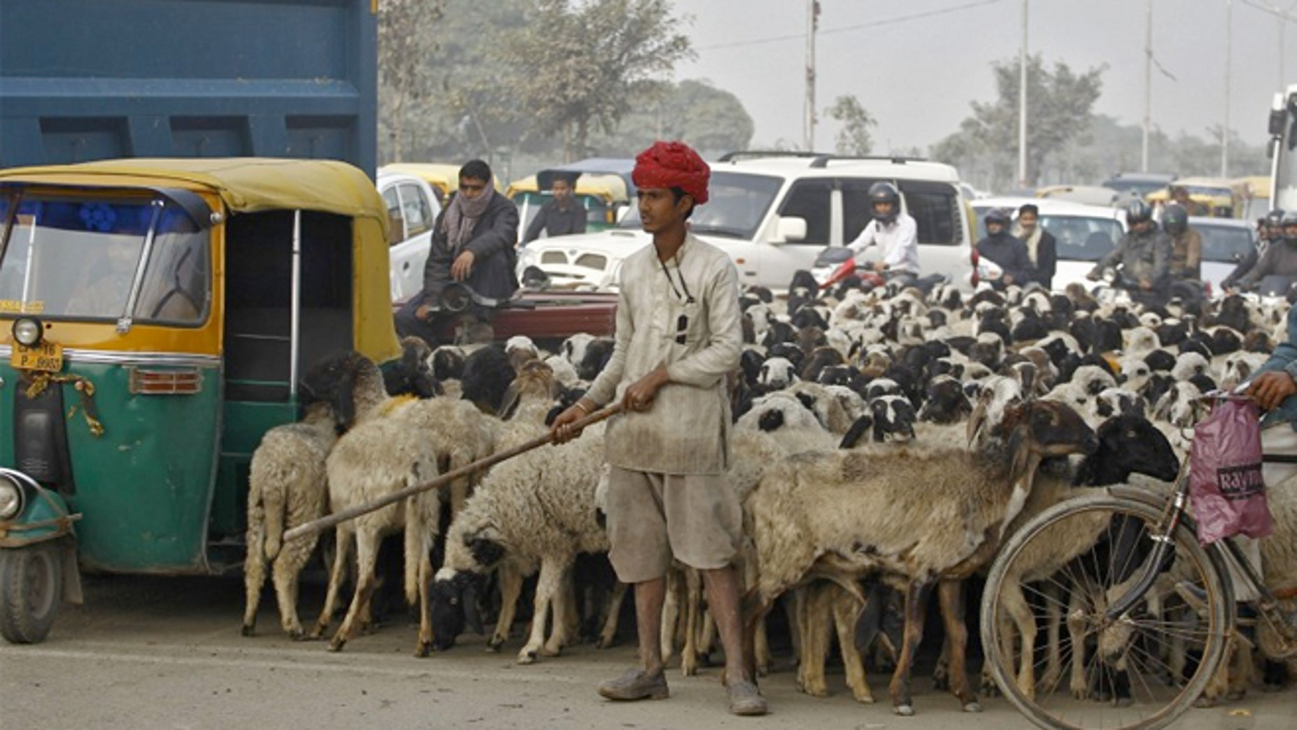 A shepard and his flock in the middle of traffic outside Delhi, India.