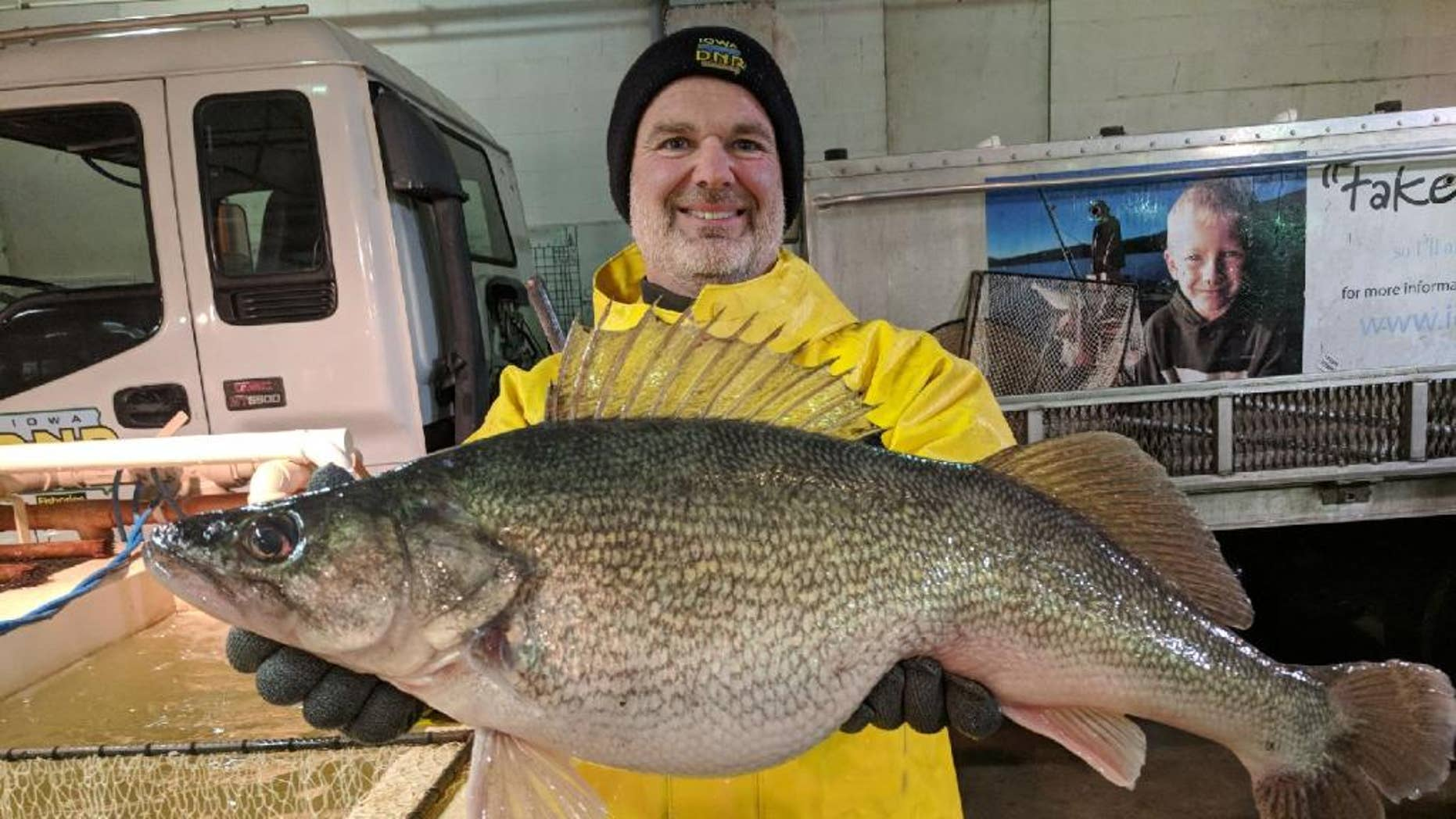 The walleye weighed nearly 13 pounds and was just over 28 inches long.
