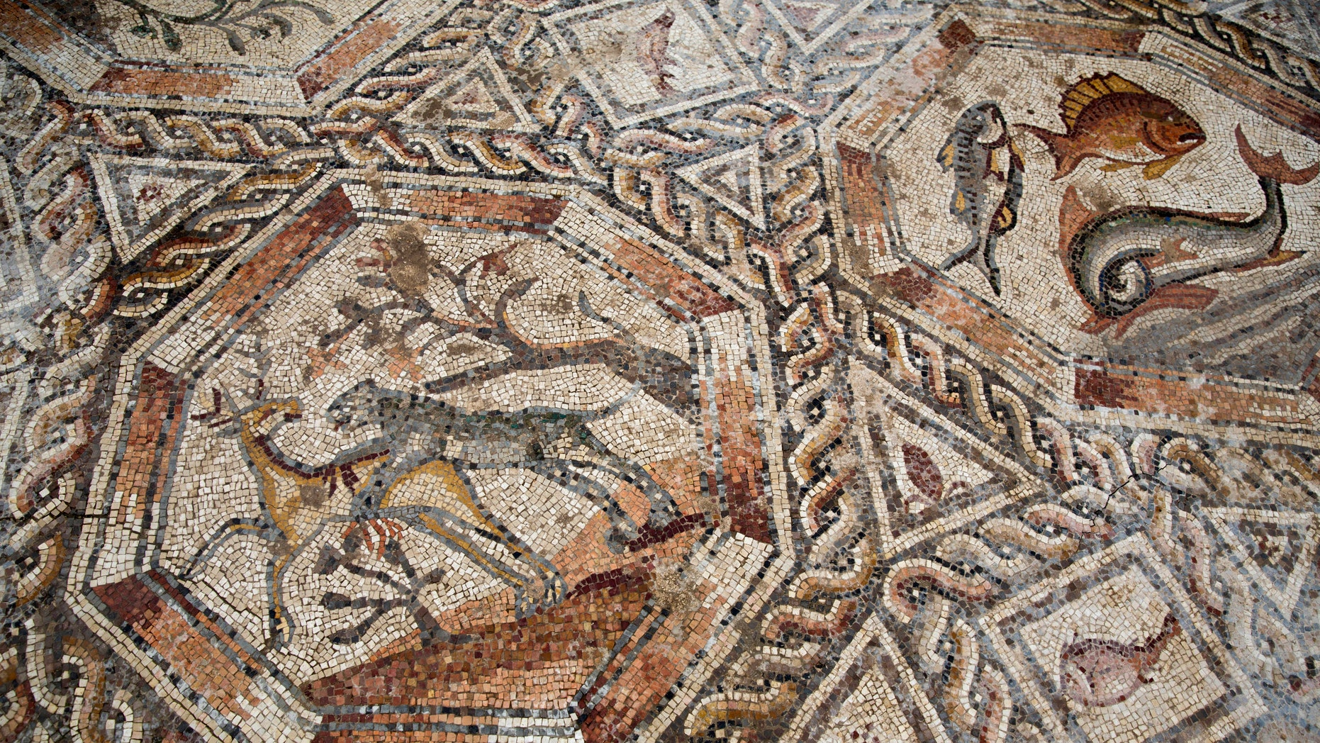 A partial view of a 1,700-year-old Roman-era mosaic floor in Lod, Israel, Monday, Nov. 16, 2015. (AP Photo/Ariel Schalit)