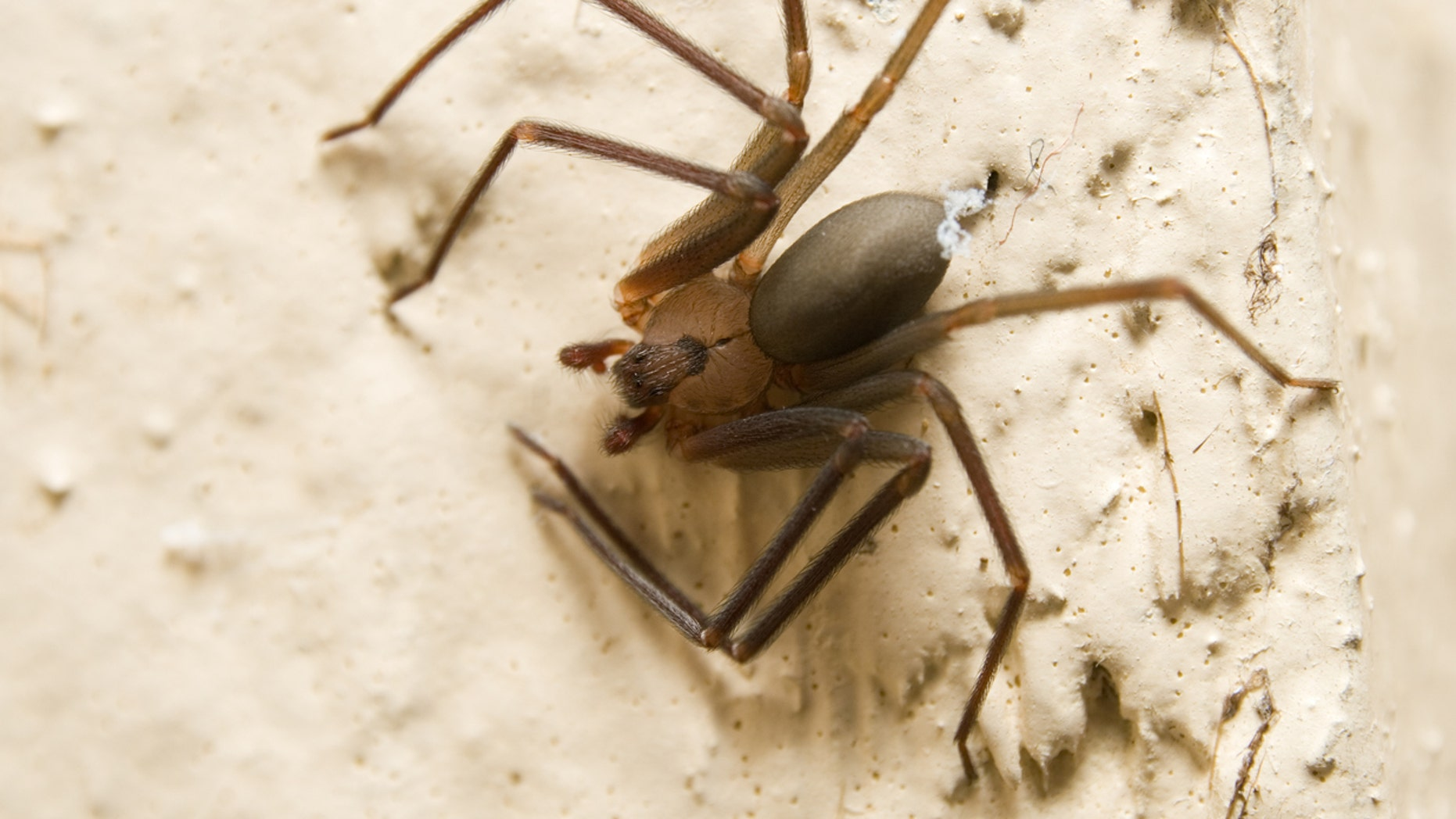 A Mississippi man who claims he was bitten by a brown recluse spider while awaiting takeoff on an American Airlines flight in 2016 is now suing.