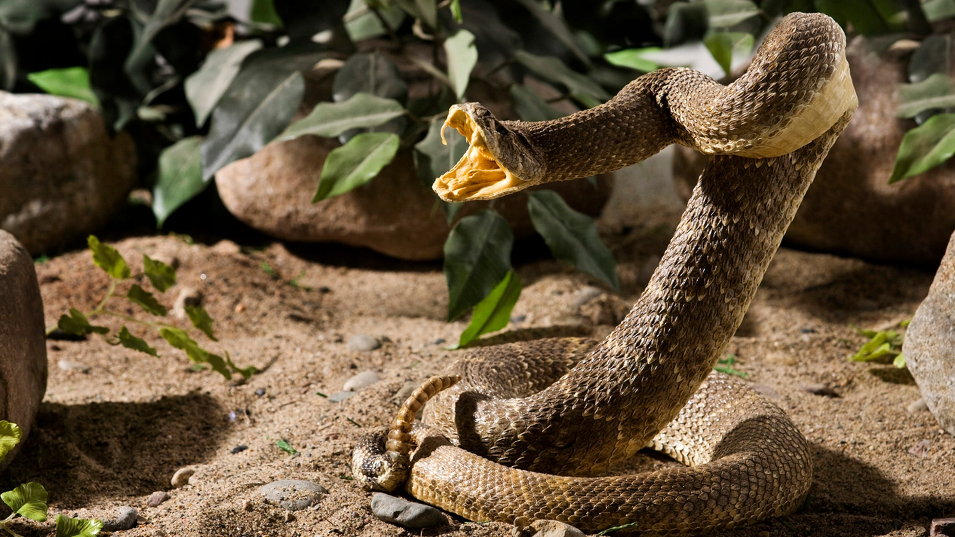 An Arizona man has learned not to play with snakes anymore.