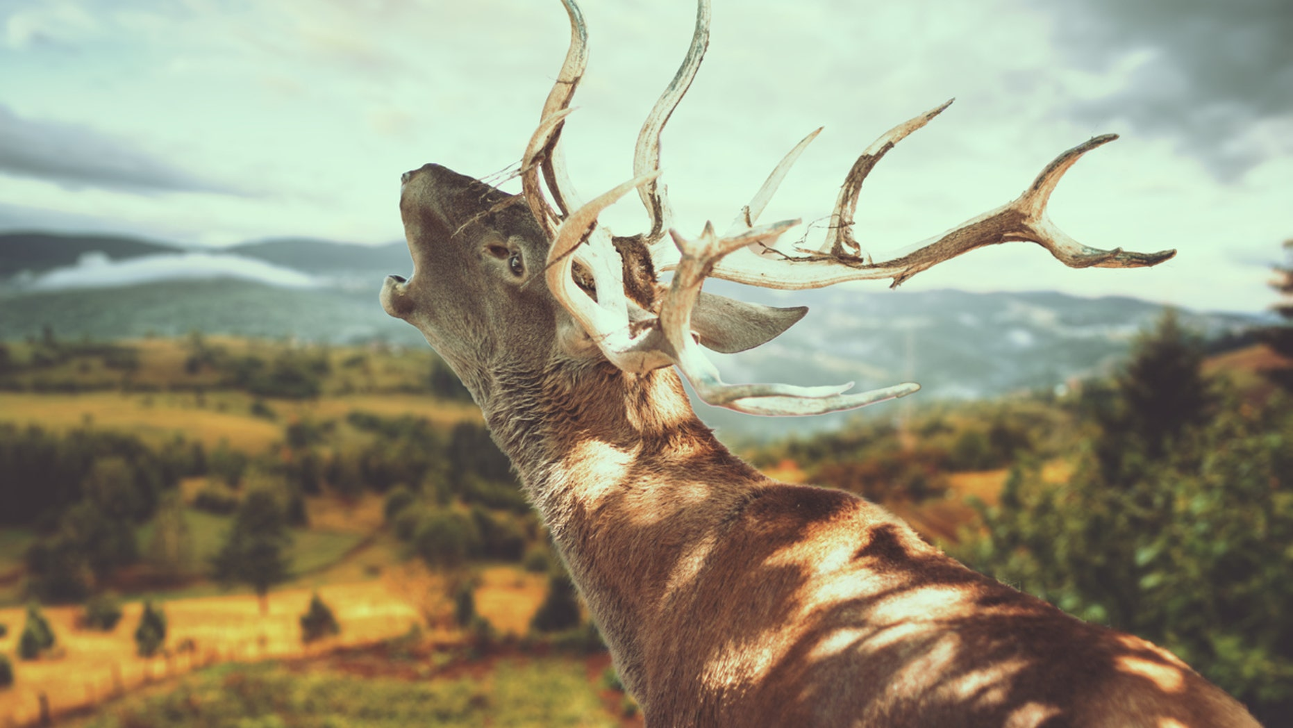 Chronic wasting disease has the potential to decimate populations, and it's spreading across the United States.