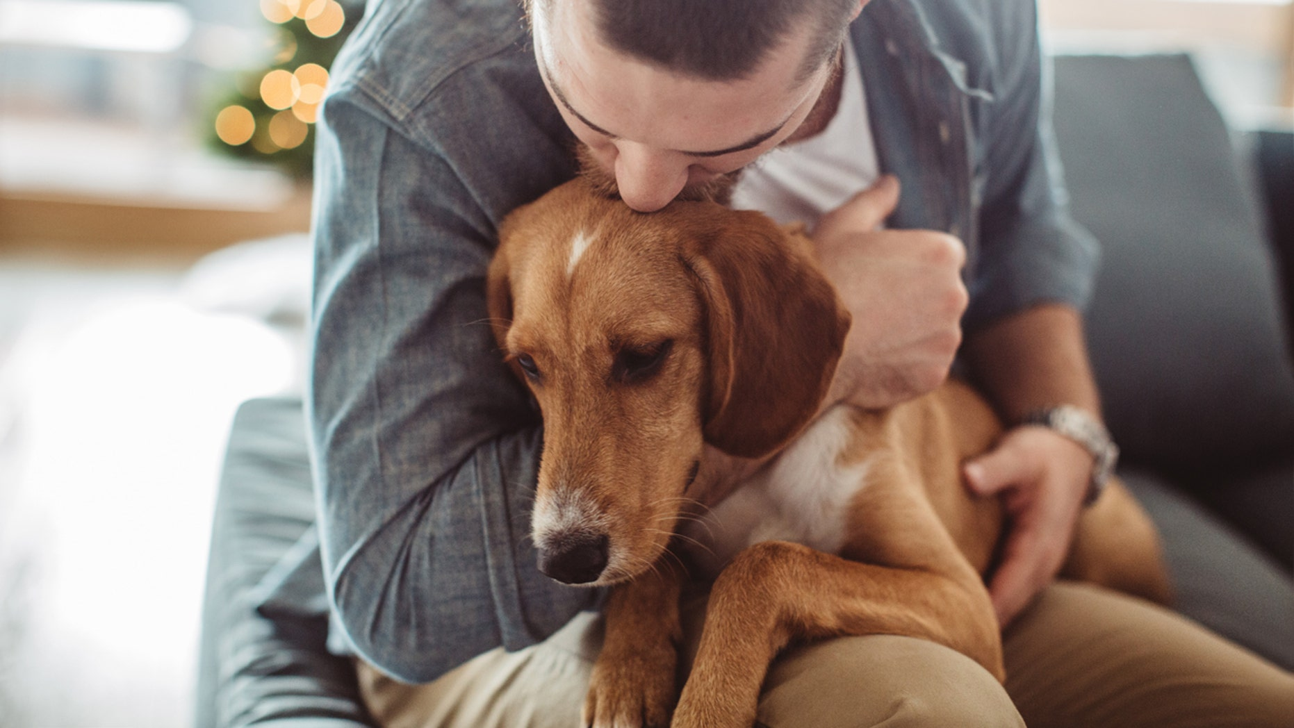 Two major studies claim that man has more empathy for dogs in dire circumstances than suffering people.