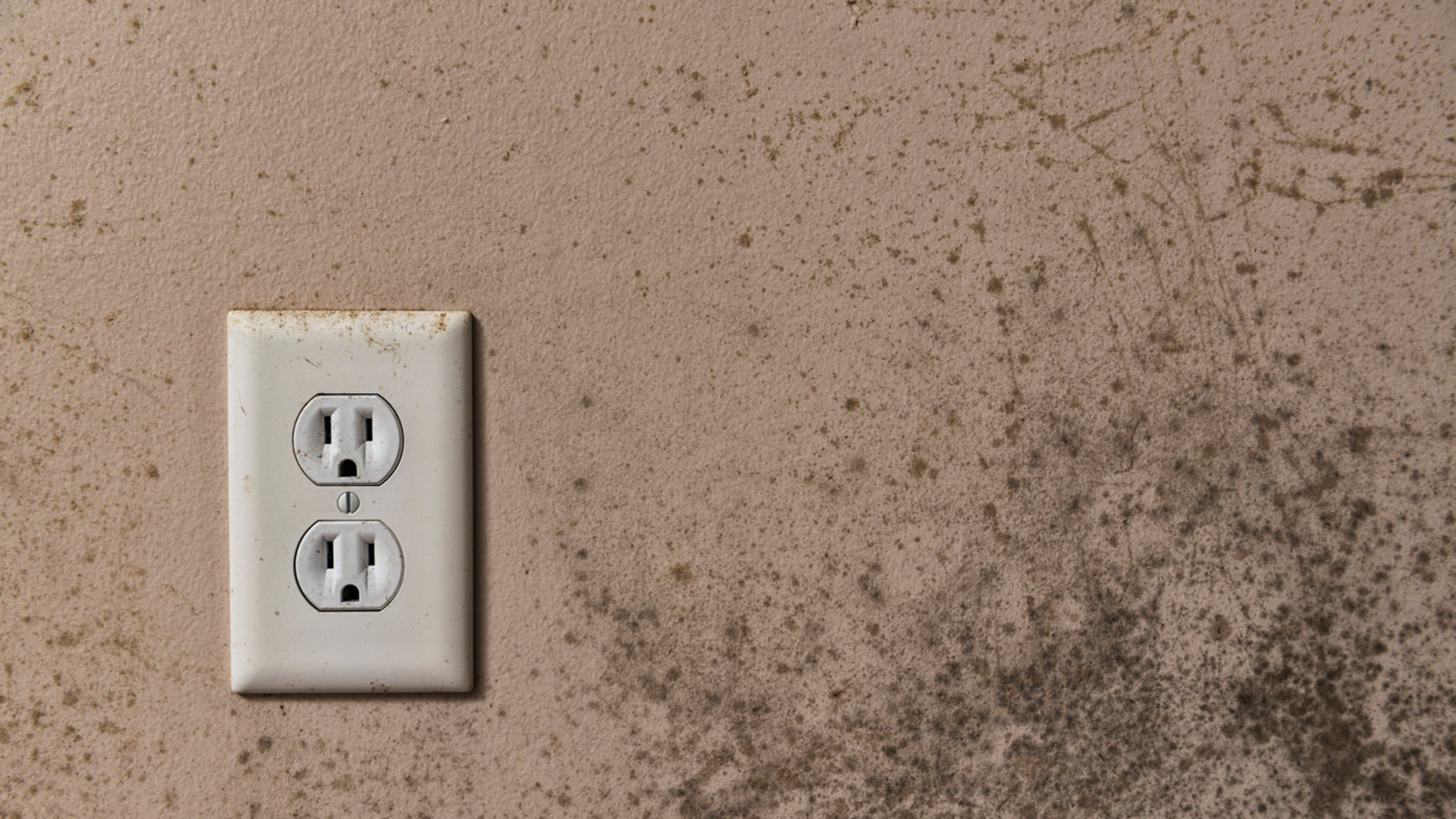 Toxic mold syndrome doesn't actually refer to the mold itself, and not every mold will produce symptoms of toxicity.