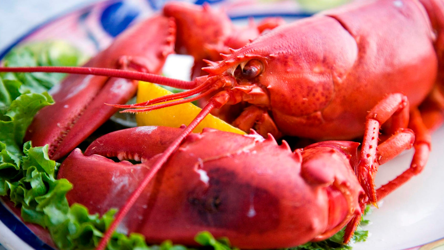 A lobster dinner with a wedge of lemon. Shallow DOF, focus on lobster's head.