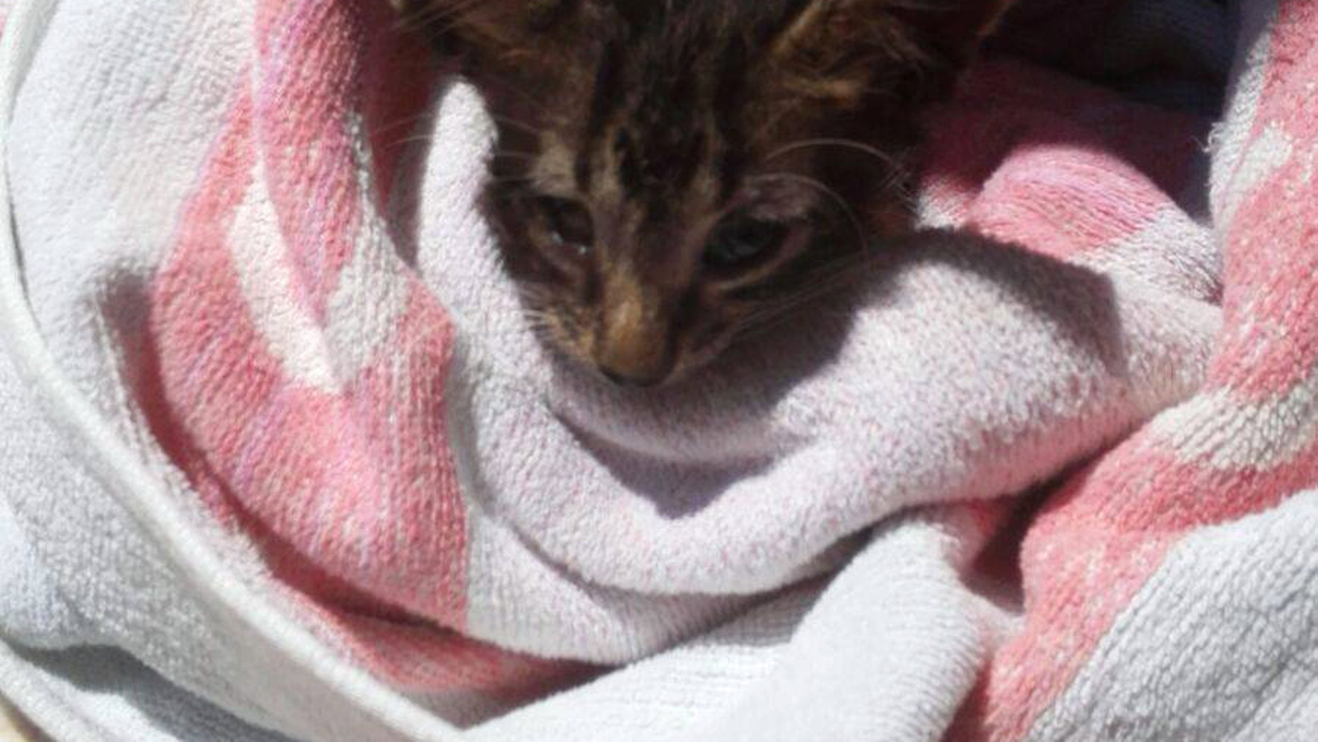 A kitten is wrapped in a towel after being rescued by the Italian Coast Guard.