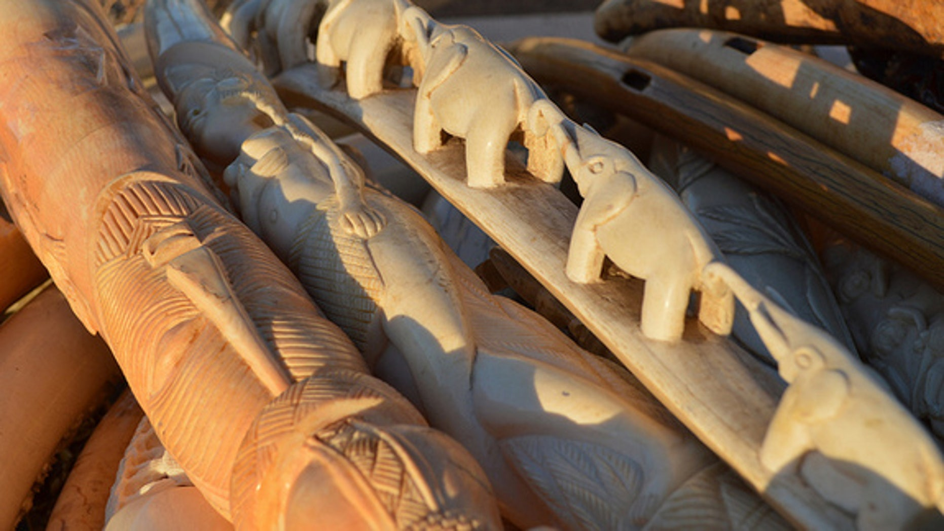 Ivory carvings awaiting destruction on the morning of Nov. 14, 2013.