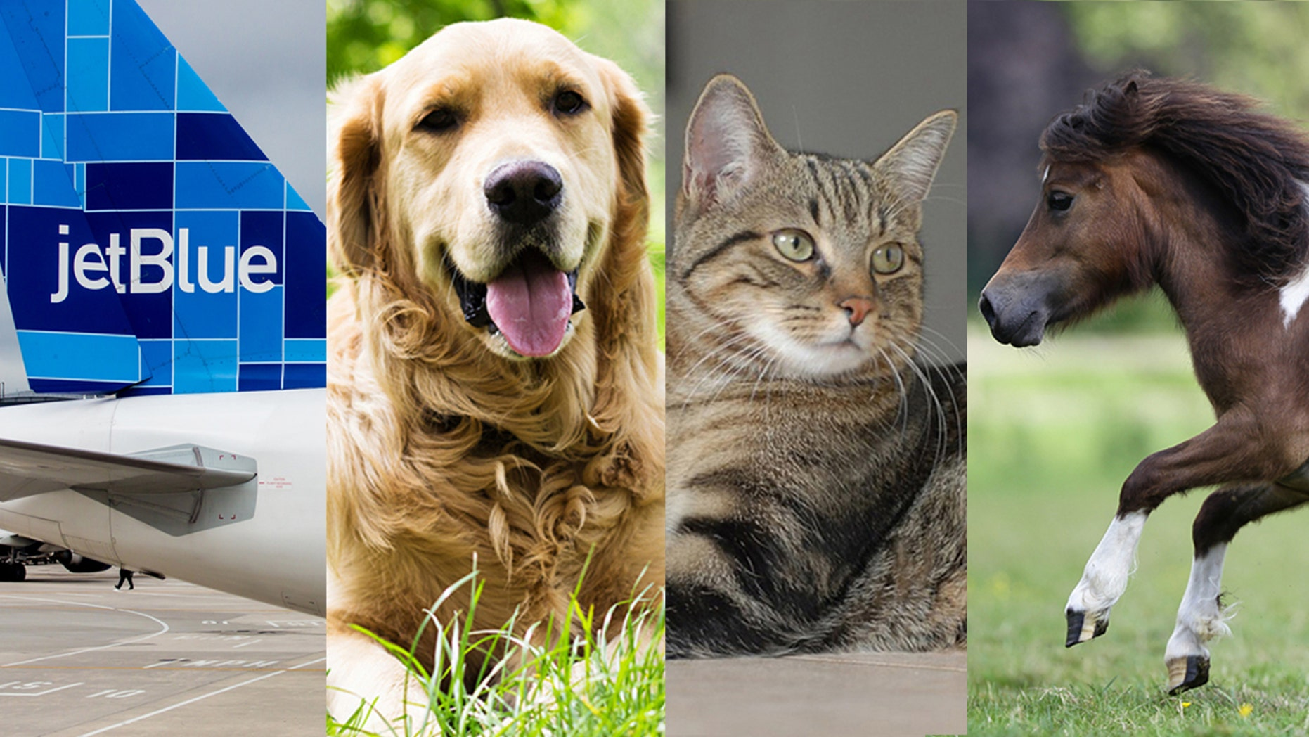 The carrier's new rules only allow dogs, cats and miniature horses on-board.