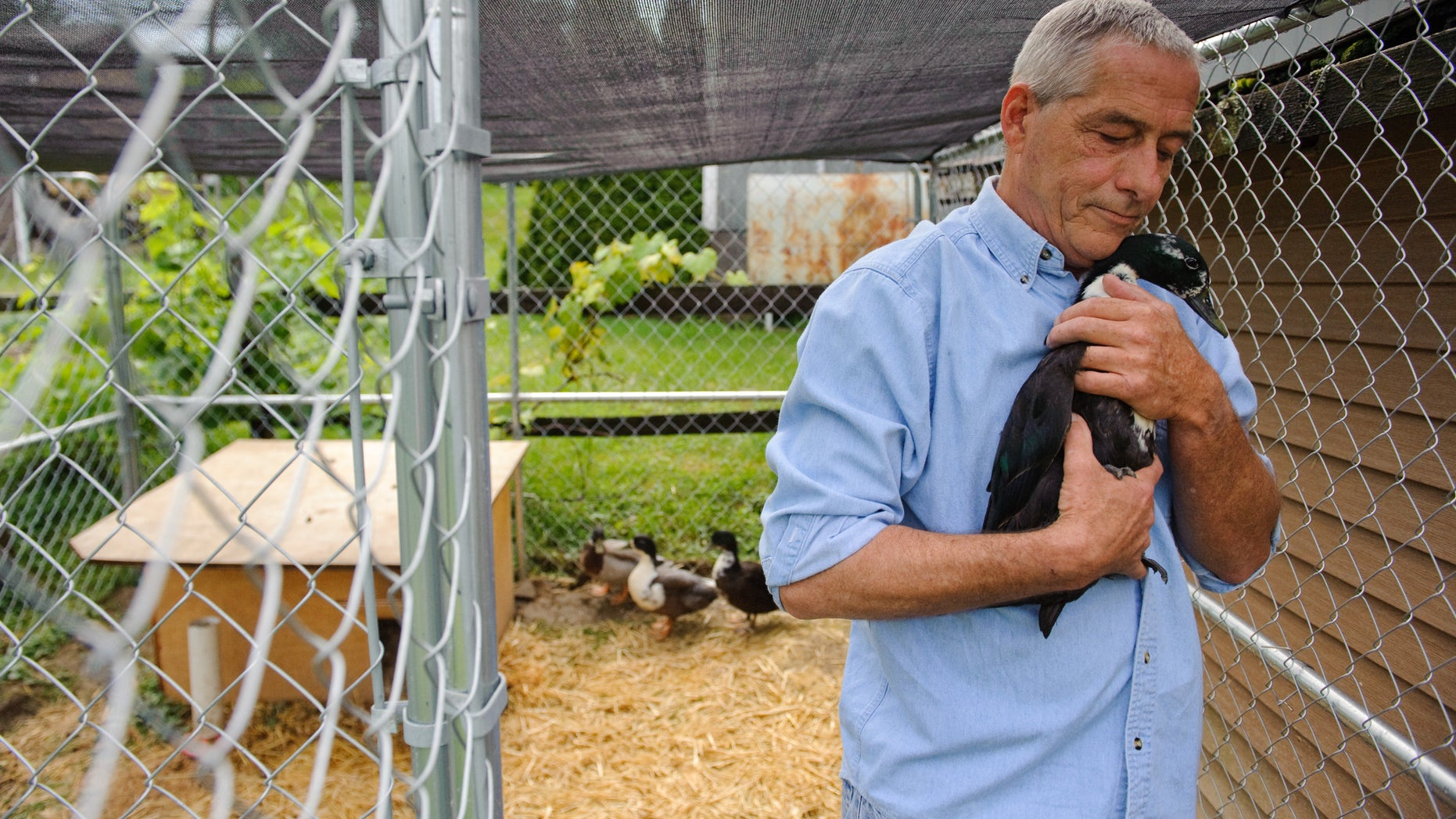 James Kistler of Delmont holds his pet duck Fred at his home on Wednesday, June 26, 2013.  Brian F. Henry | Tribune-Review