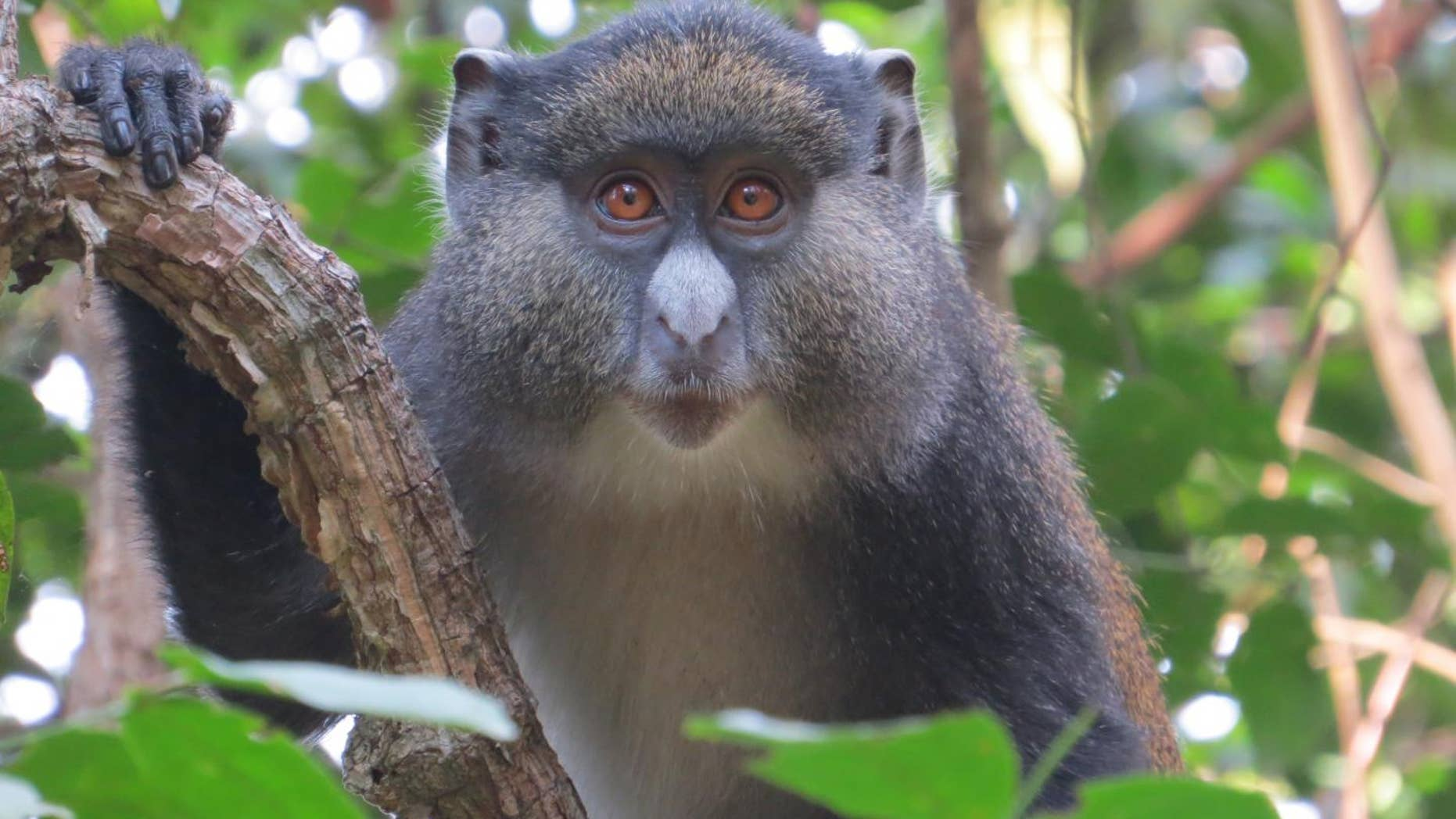 Thanks. Picture of monkey having sex necessary