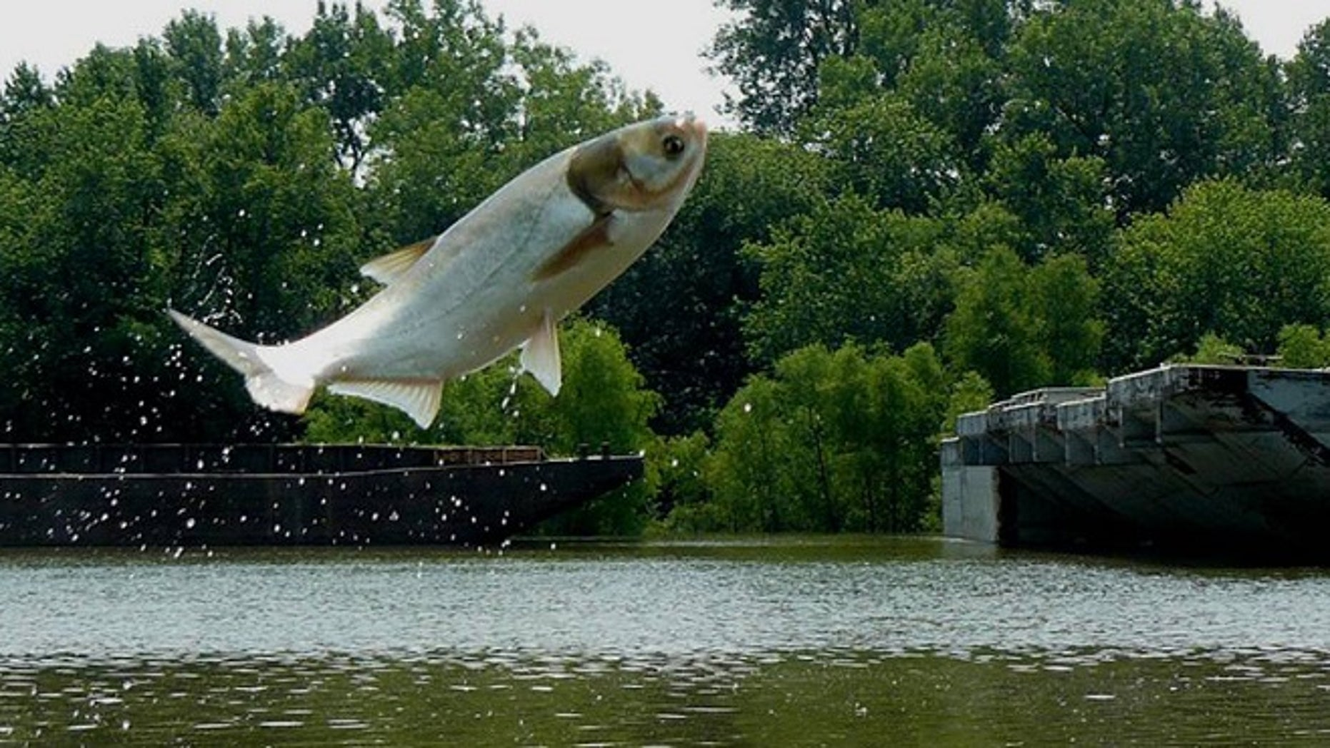 The Great Lakes Restoration Initiative is focusing on preventing invasive species, like asian carp, from entering the Great Lakes.