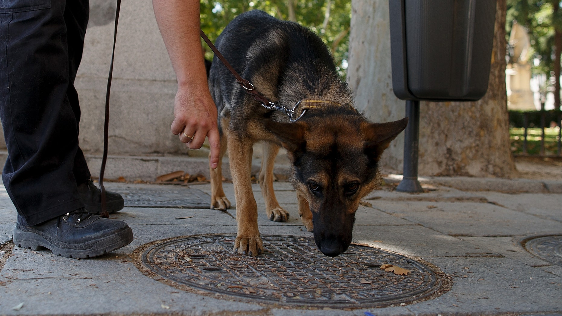 MADRID, SPAIN - JUNE 17:  A policeman working with a police dog checks a manhole cover at Plaza de Oriente near the Royal Palace on June 17, 2014 in Madrid, Spain.  Prince Felipe will be crowned Felipe VI of Spain on June 19th after his father King Juan Carlos abdicated on June 2.  (Photo by Pablo Blazquez Dominguez/Getty Images)