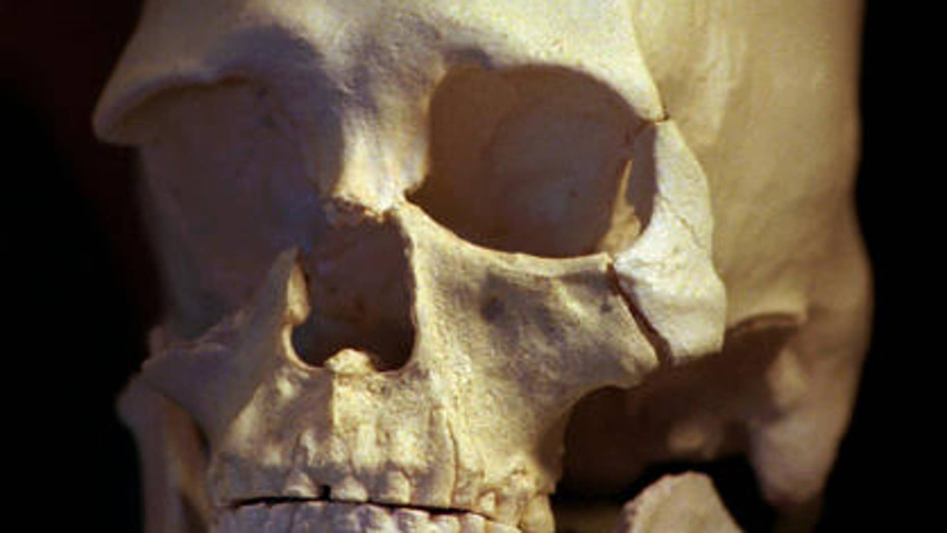 File photo: This July 24,1997 photo a plastic casting of the skull from the bones known as Kennewick Man, is shown in in Richland, Wash. (AP Photo/Elaine Thompson)