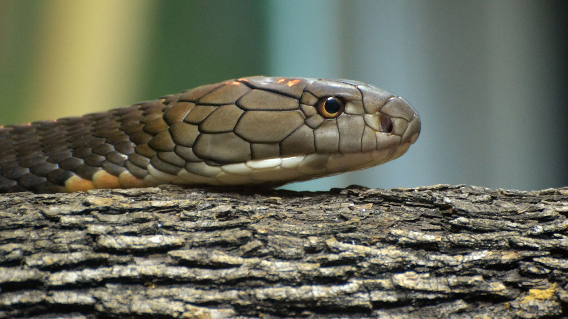 The snakes were found during an X-ray scan of a package at JFK's International Mail Facility.