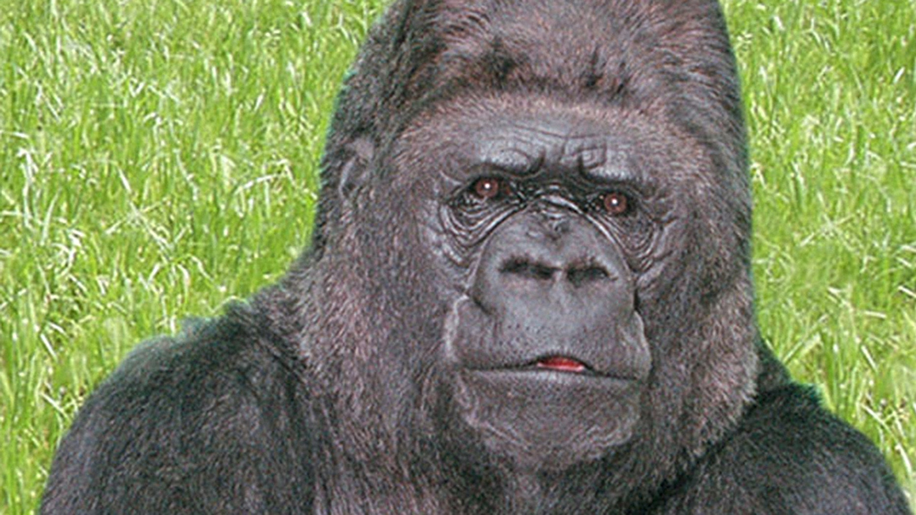 Koko, the gorilla who mastered sign language, has died age 46 in her sleep at the Gorilla Foundation's preserve in the Santa Cruz Mountains