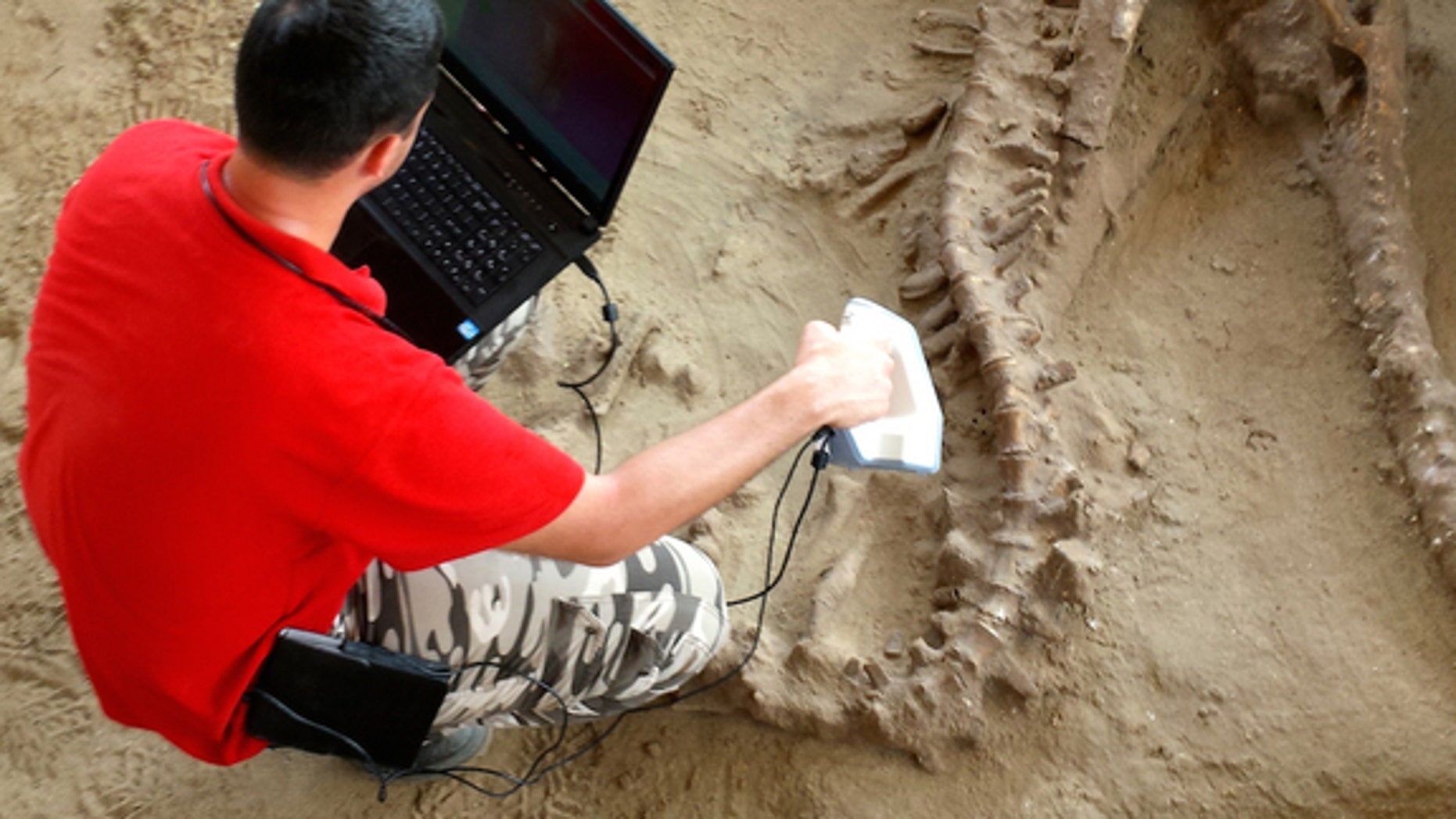 Denis Baev takes a 3-dimensional scan of the crocodile, whose long snout likely helped it catch fish during its lifetime 1.8 million years ago.