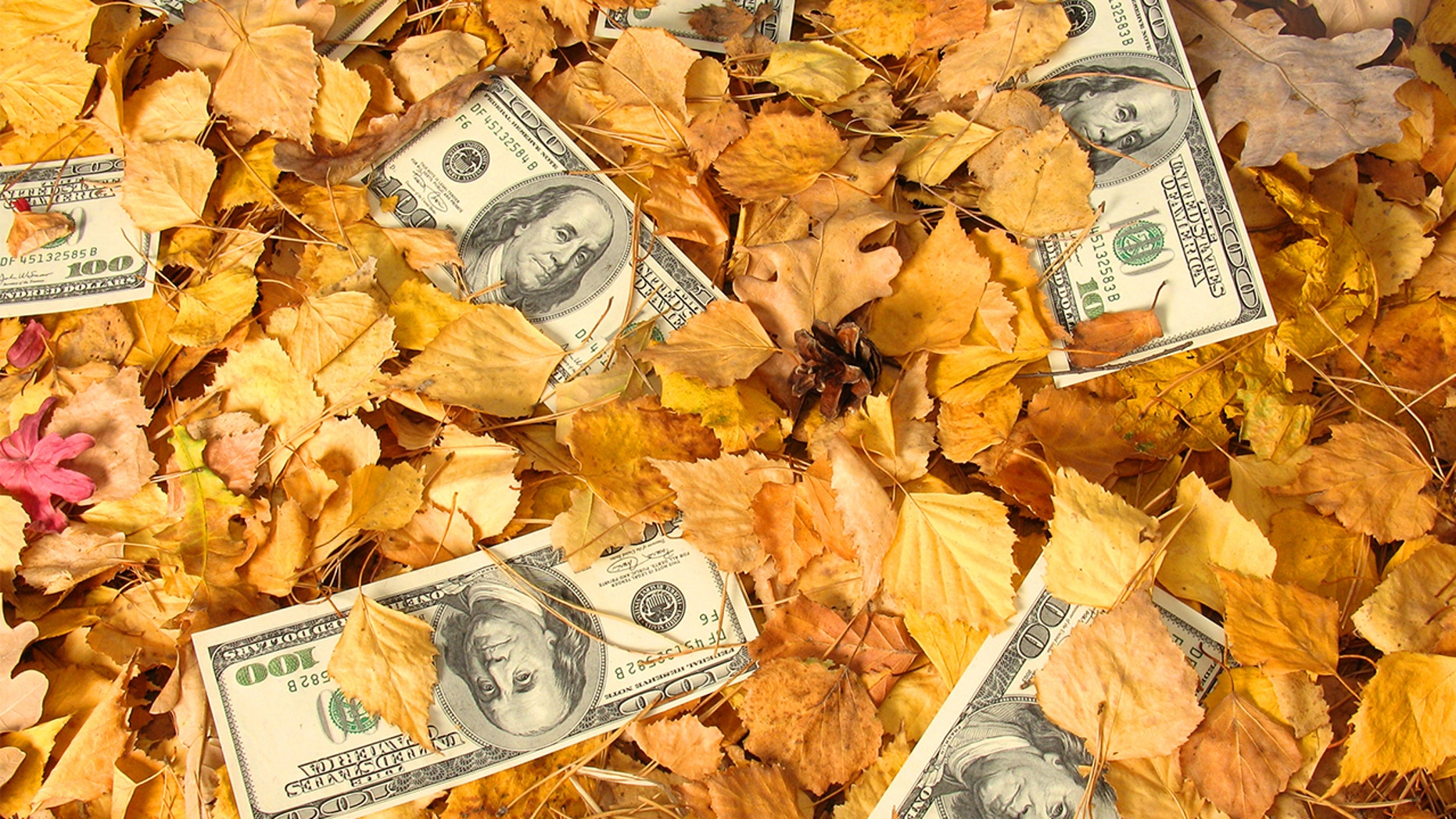 Perhaps money really does grow on trees.