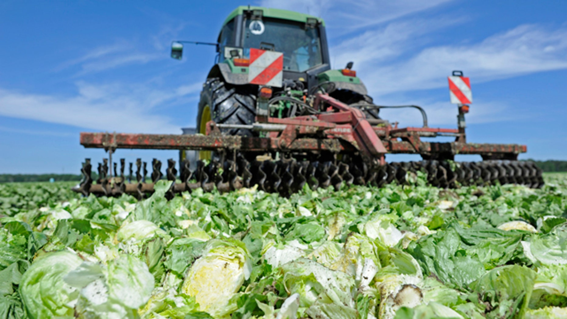 Lettuces are destroyed by a tractor in a field near Hamburg June 1, 2011.