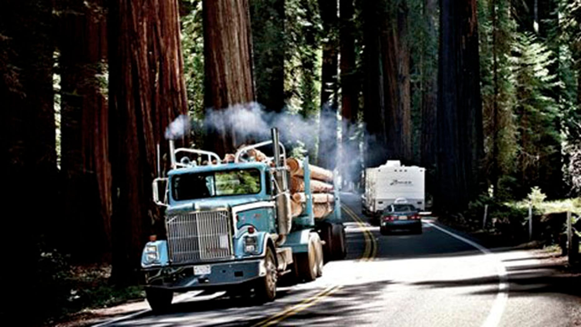 A lumber truck makes its way through the woods with freshly cut timber.
