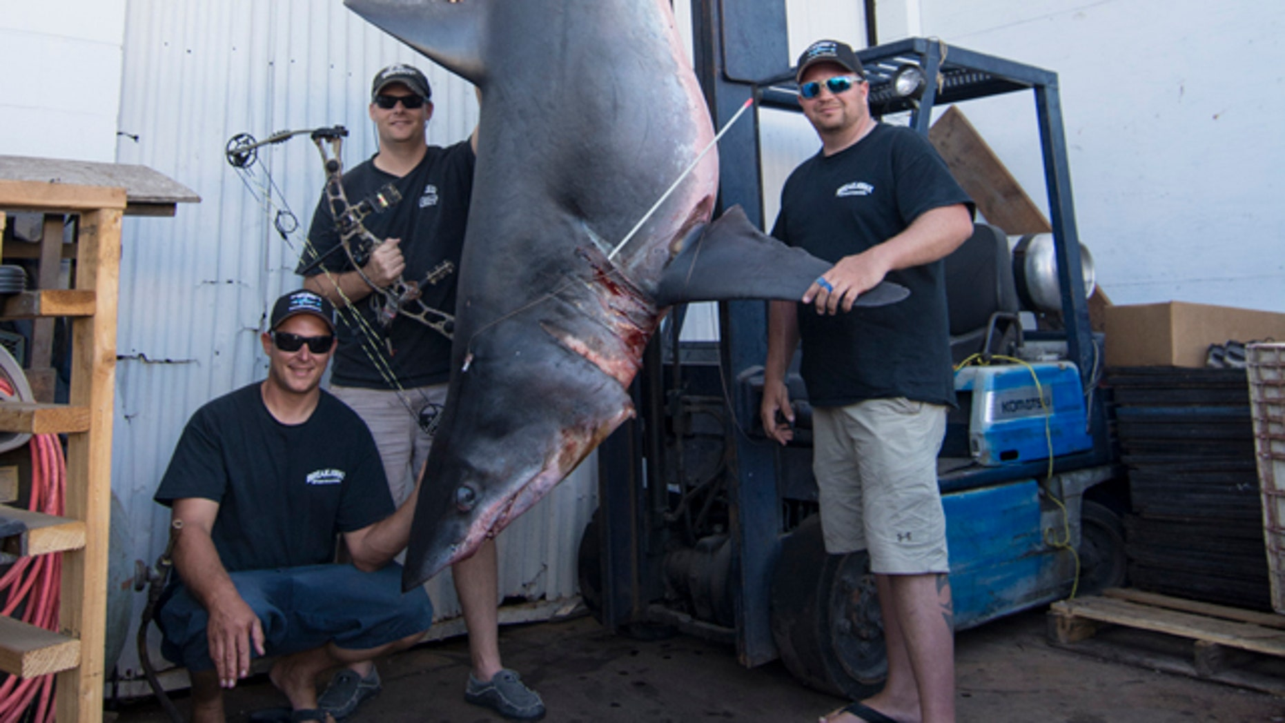 An outdoor TV host's catch of a 809.5-pound Mako shark in August off the coast of southern California was deemed the largest ever caught using a compound bow.