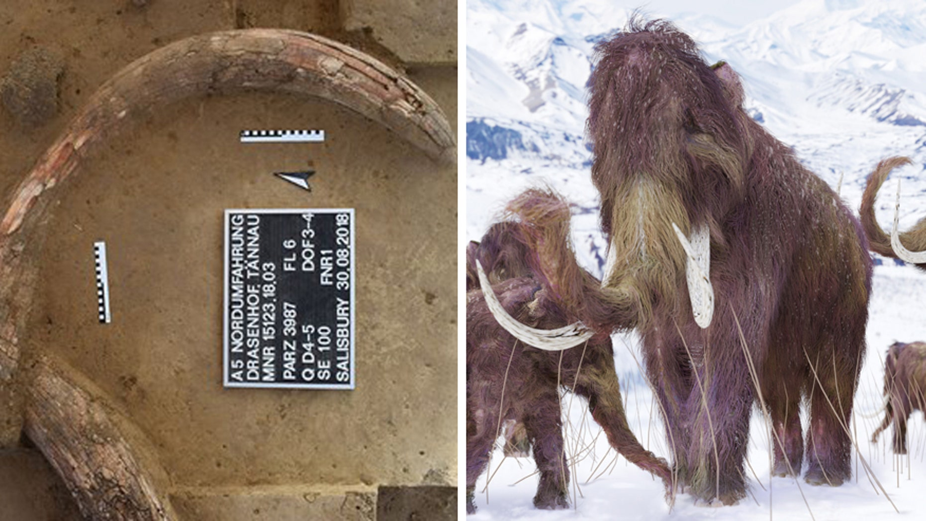 A mammoth tusk at the Stone Age 'kill site/artist's illustration of a woolly mammoth (ASFiNAG/iStock/Aunt_Spray)