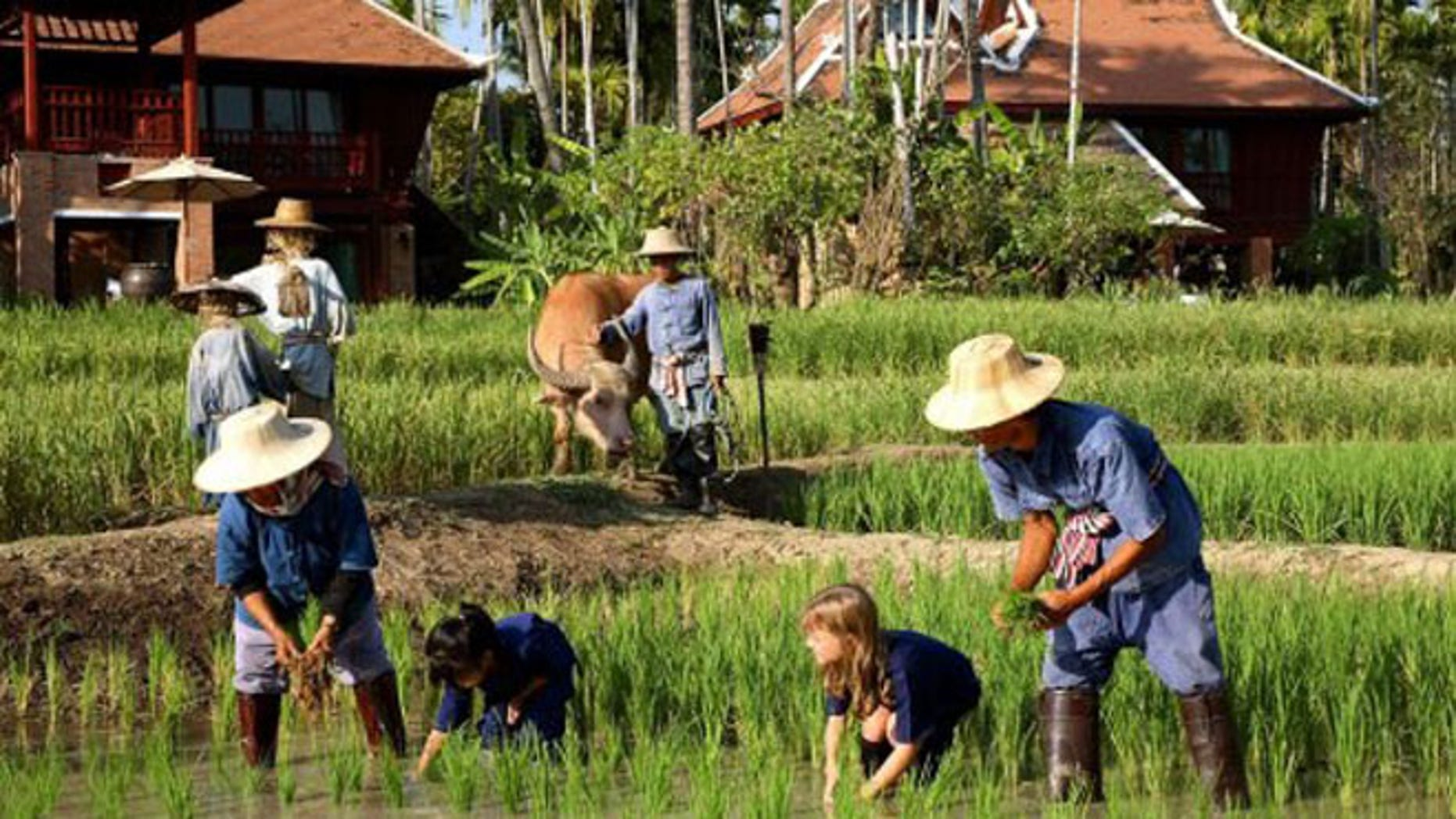 The kids' club at 2013 Gold List property, Chiang Mai's Mandarin Oriental Dhara Dhevi ups its game (and puts other clubs to shame) with activities like rice planting, water buffalo riding, and muay thai (kickboxing).